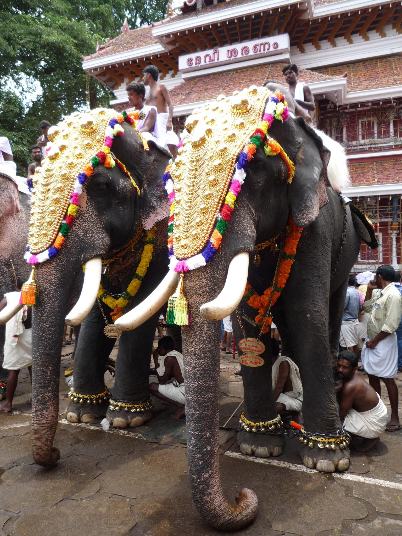 Free Images Travel Decoration Mammal Colorful Elephant