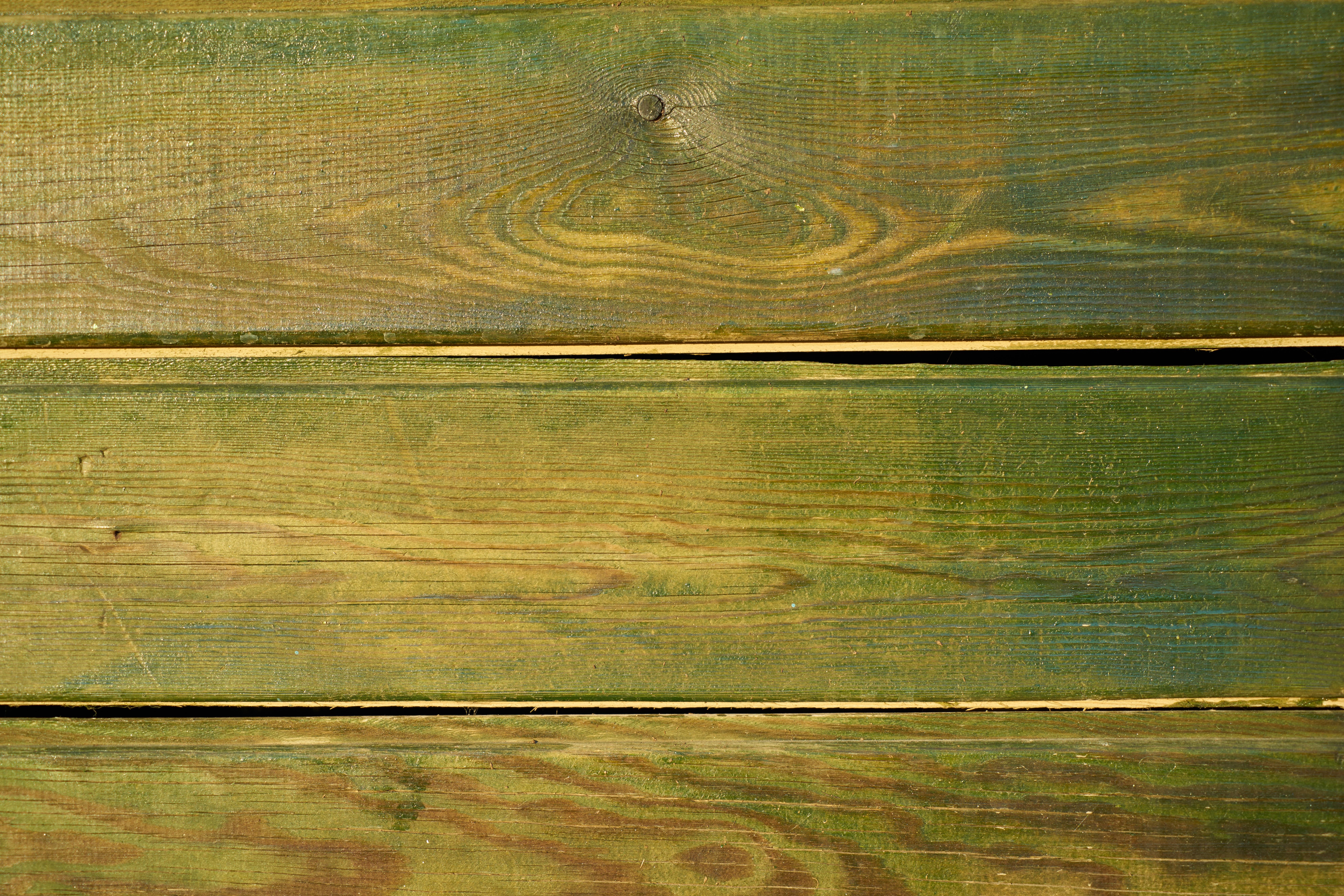 Fotoğraf Ağaç Soyut Doku Yaprak Zemin Eski Desen Yeşil
