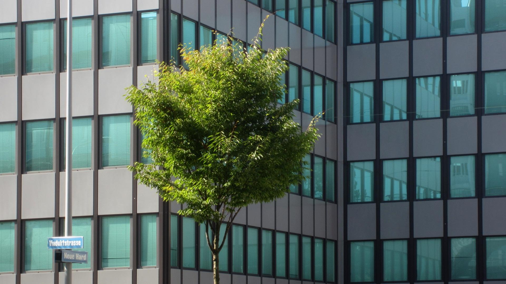 무료 이미지 : 나무, 건축물, 집, 창문, 유리, 건물, 시티, 마천루 ...