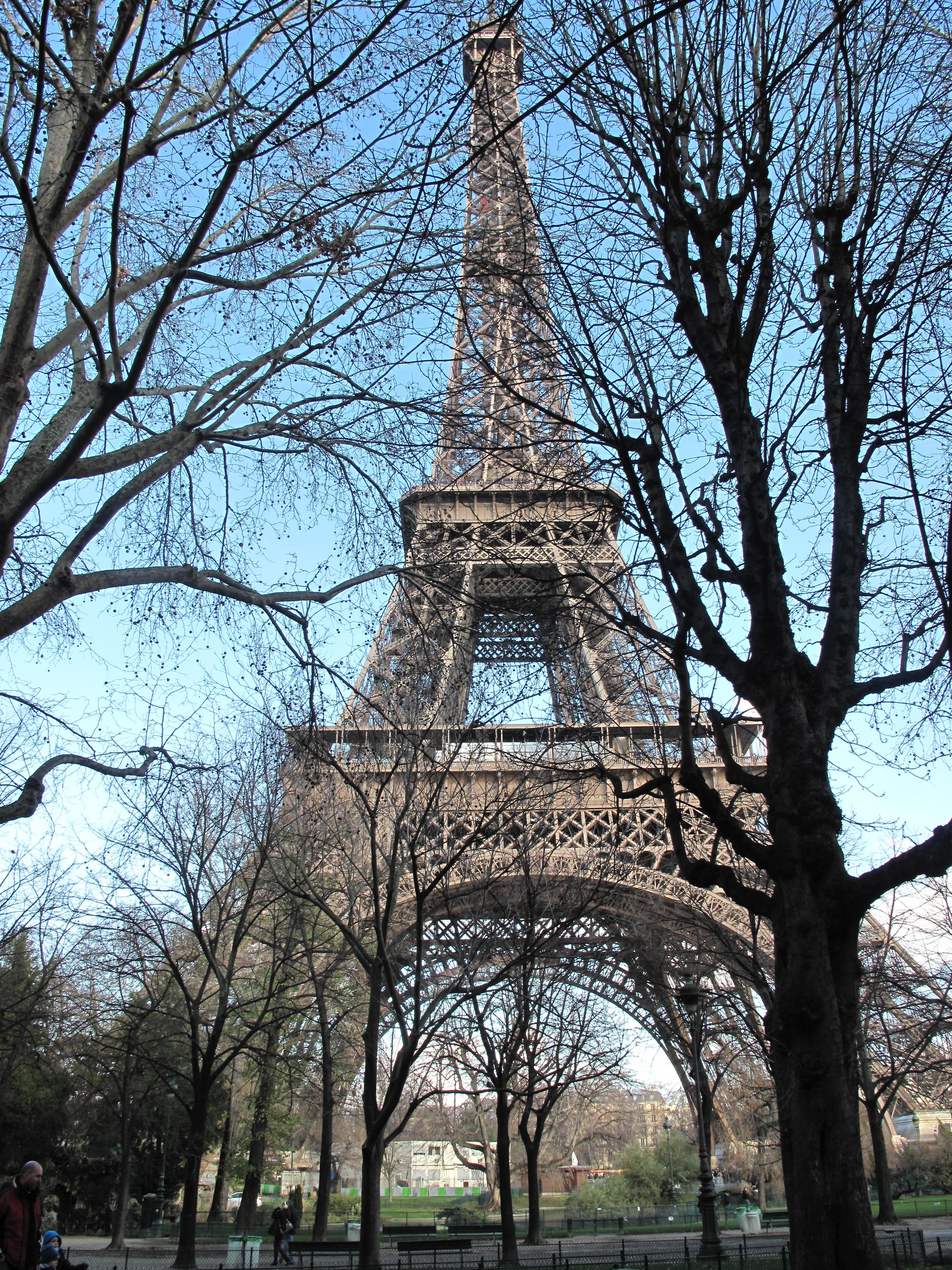 Free Images Tree Architecture Flower Eiffel Tower Paris