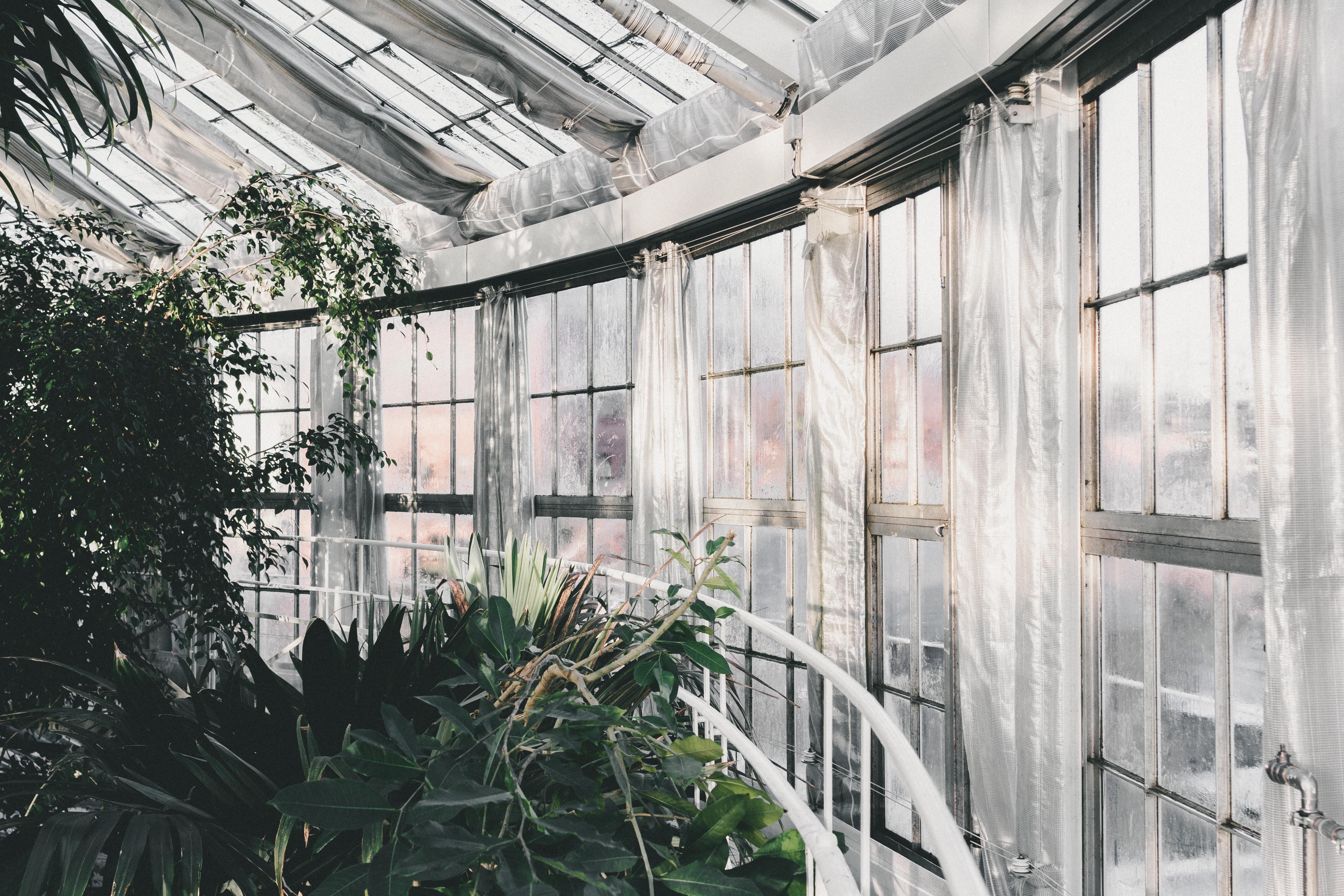 Kostenlose foto : Baum, die Architektur, Pflanze, Haus, Fenster ...
