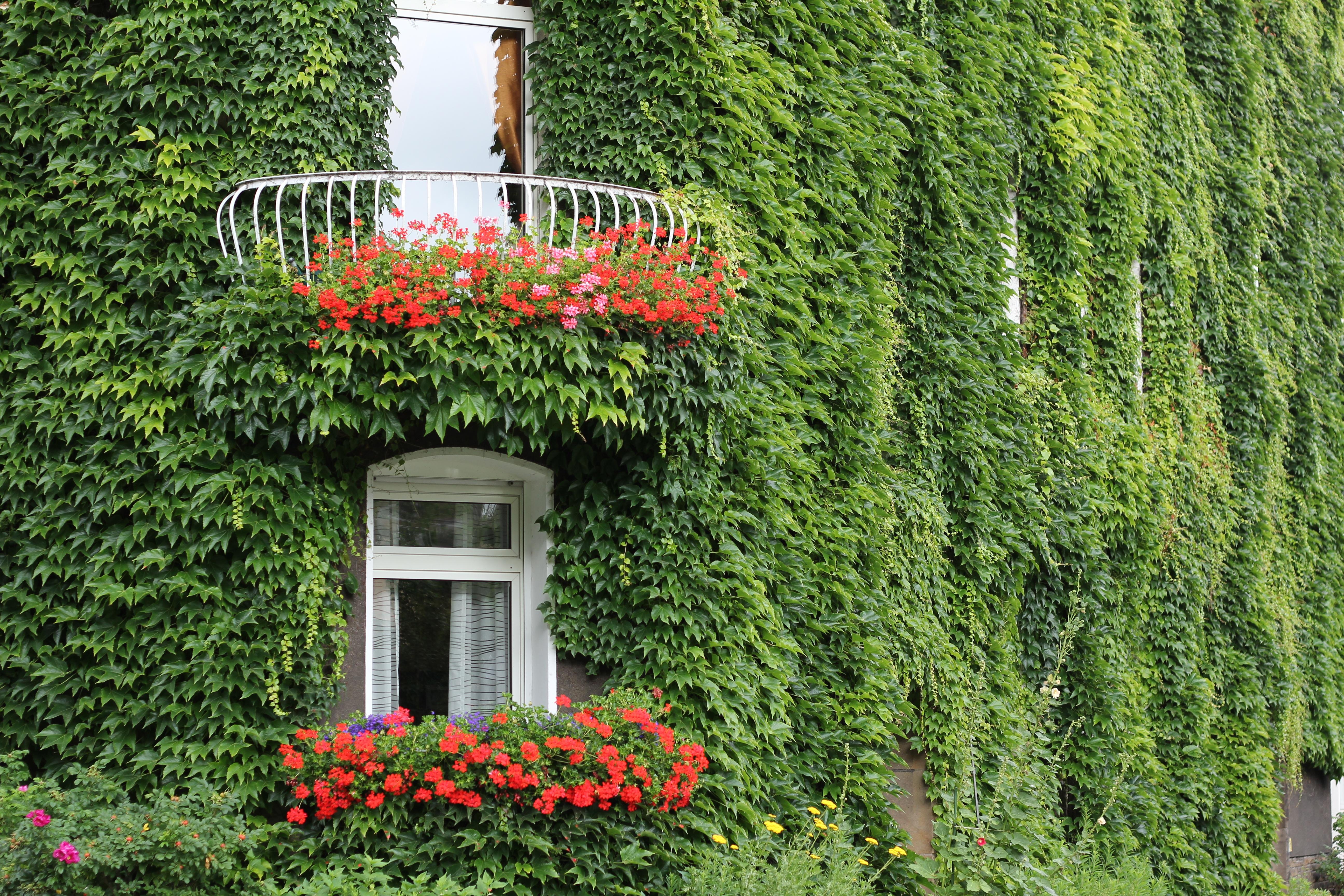 фото популярных вьющихся растений тебе твоём