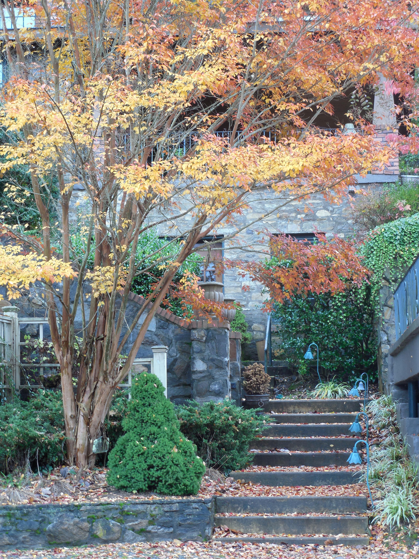 images gratuites arbre architecture plante escalier. Black Bedroom Furniture Sets. Home Design Ideas