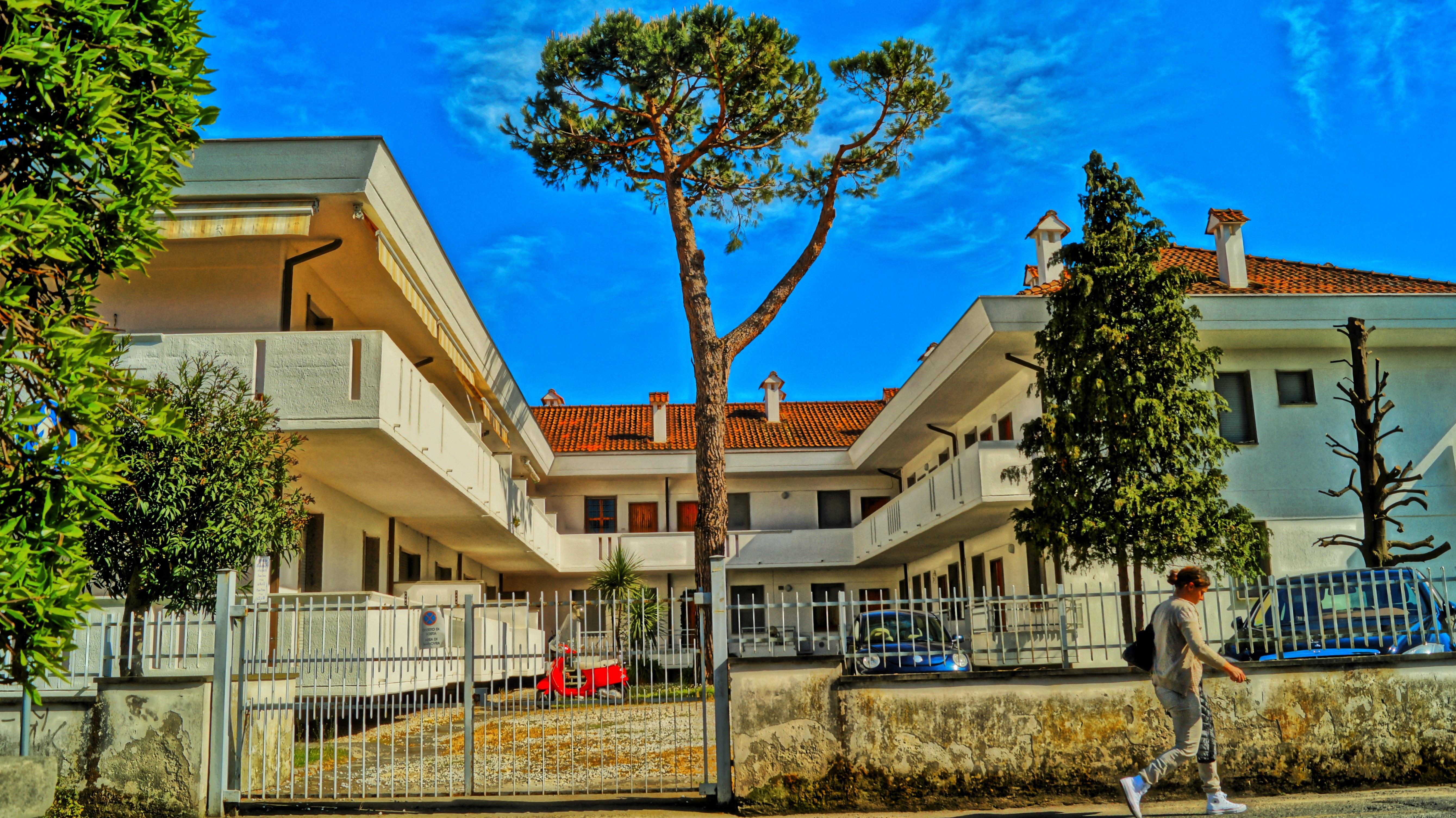Gambar Pohon Arsitektur Langit Matahari Vila Rumah Besar