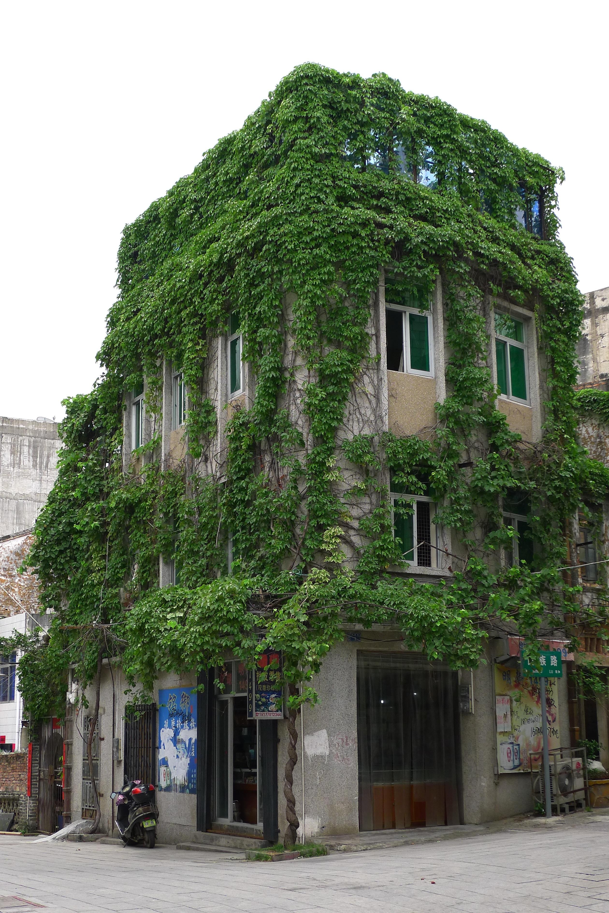 Images gratuites arbre architecture rue maison ville for Agrandissement maison zone verte