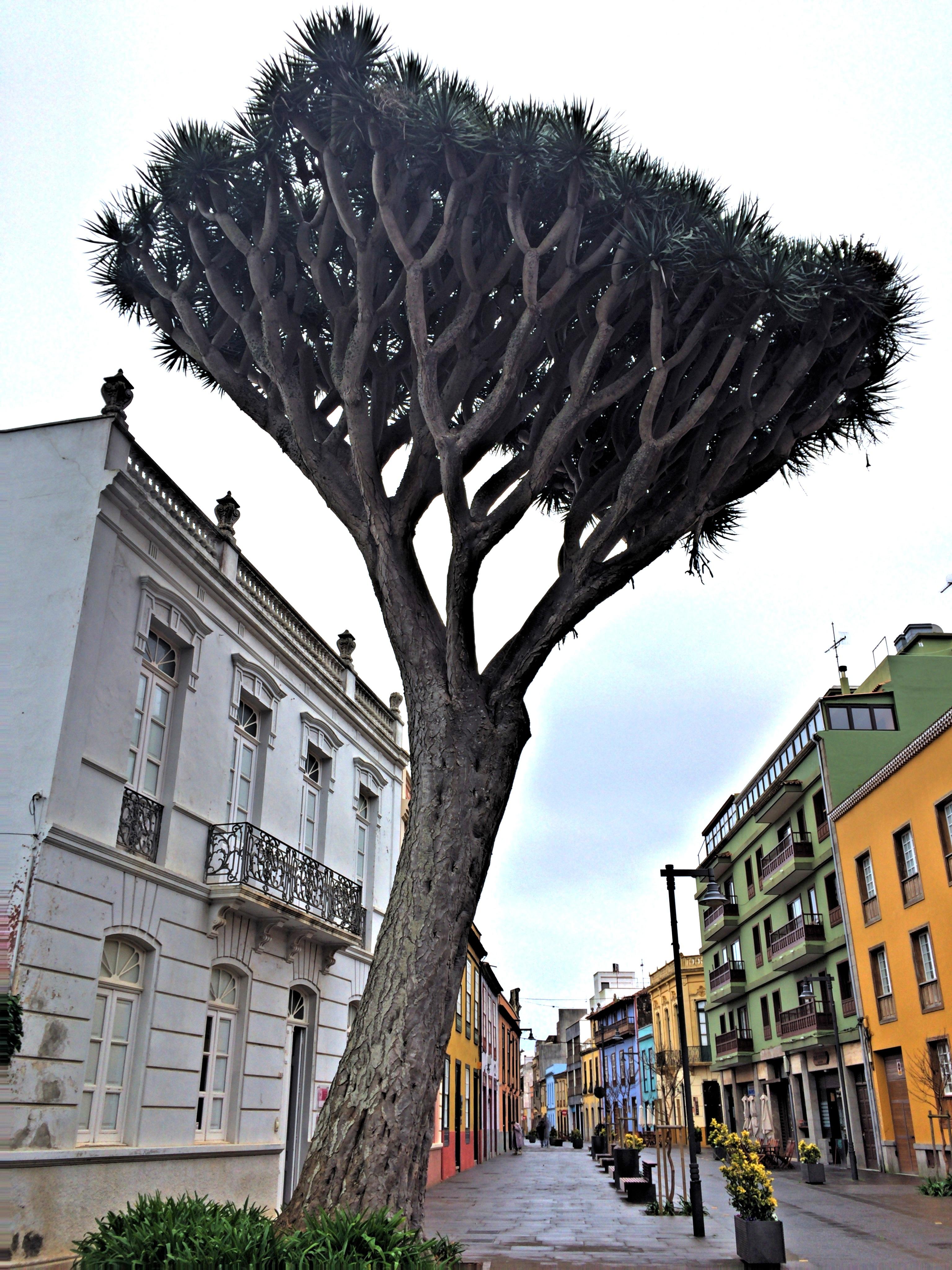 картинки деревьев на улицах фитнесу это человек