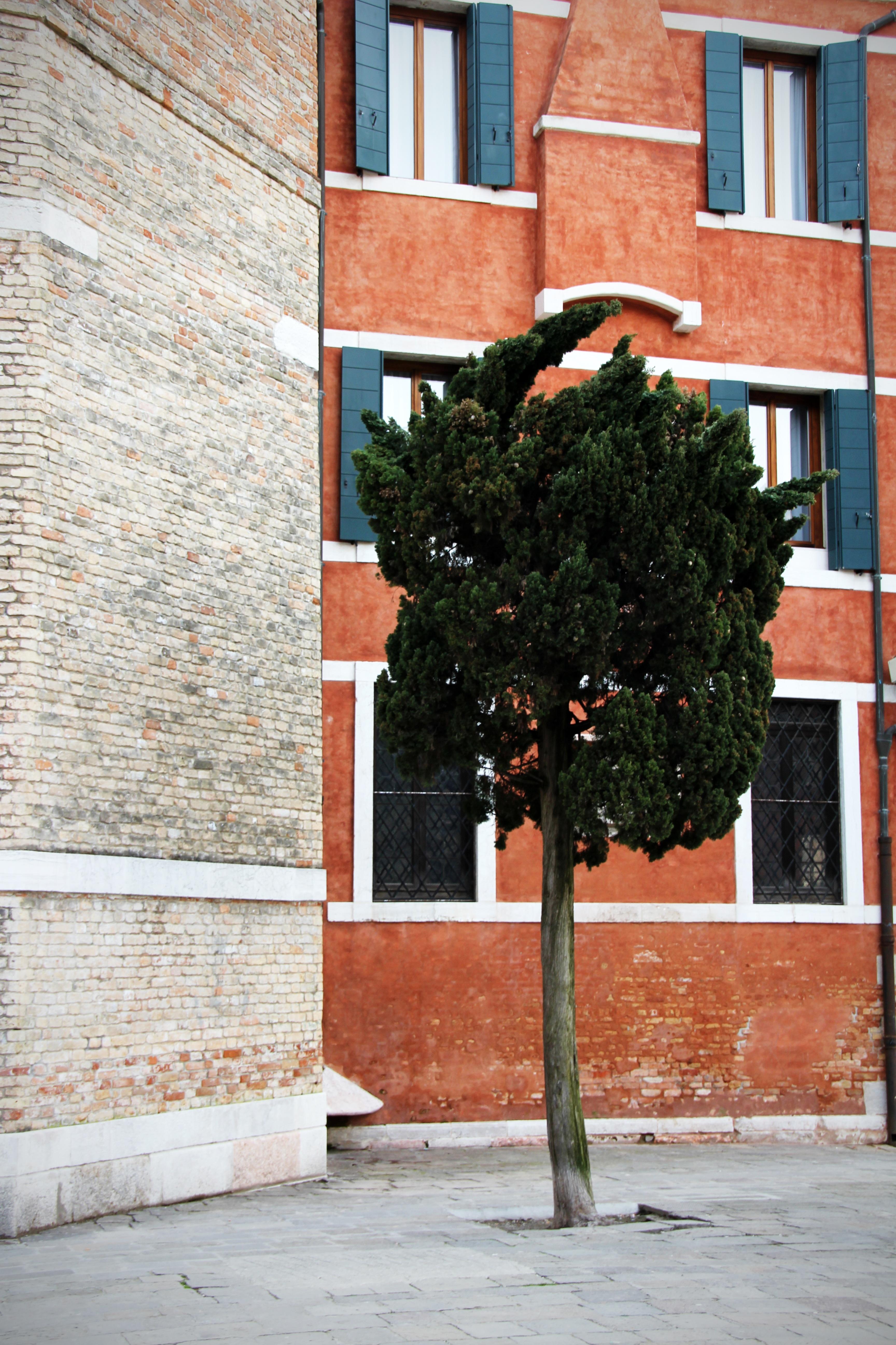 Images Gratuites Arbre Architecture Bois Rue Maison Fen Tre  # Mur De Brique Avec Foyer