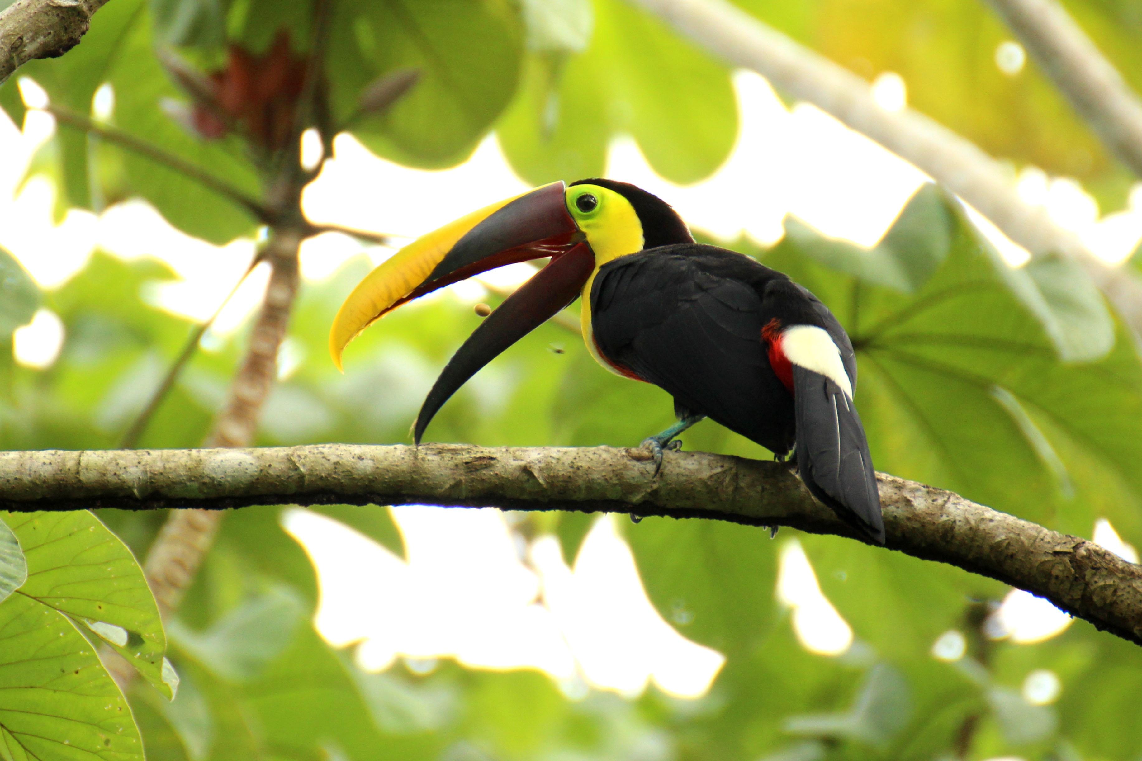 Fotos de aves hermosas 2