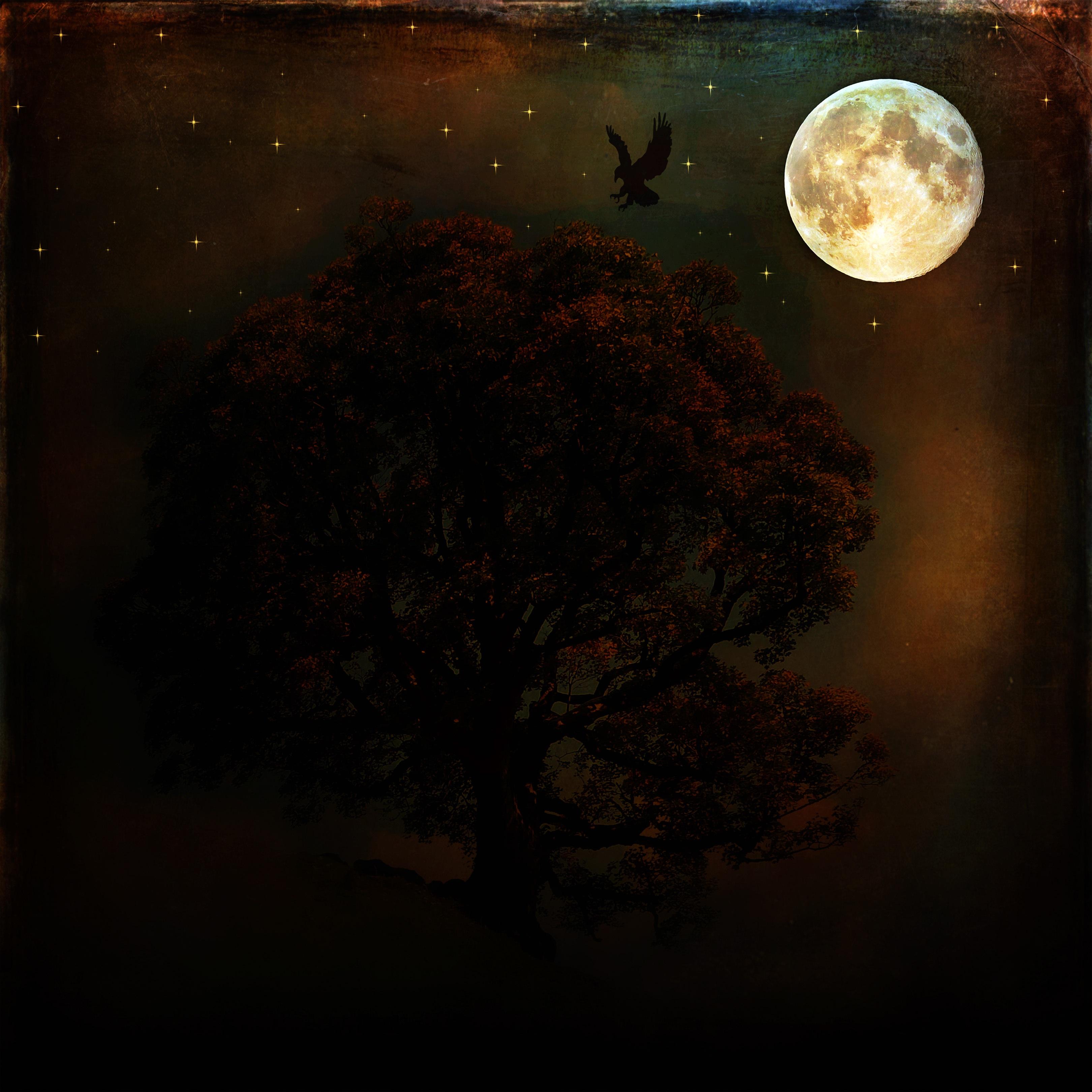 Fotoğraf Ağaç Kuş ışık Gece Güneş ışığı Doku Atmosfer