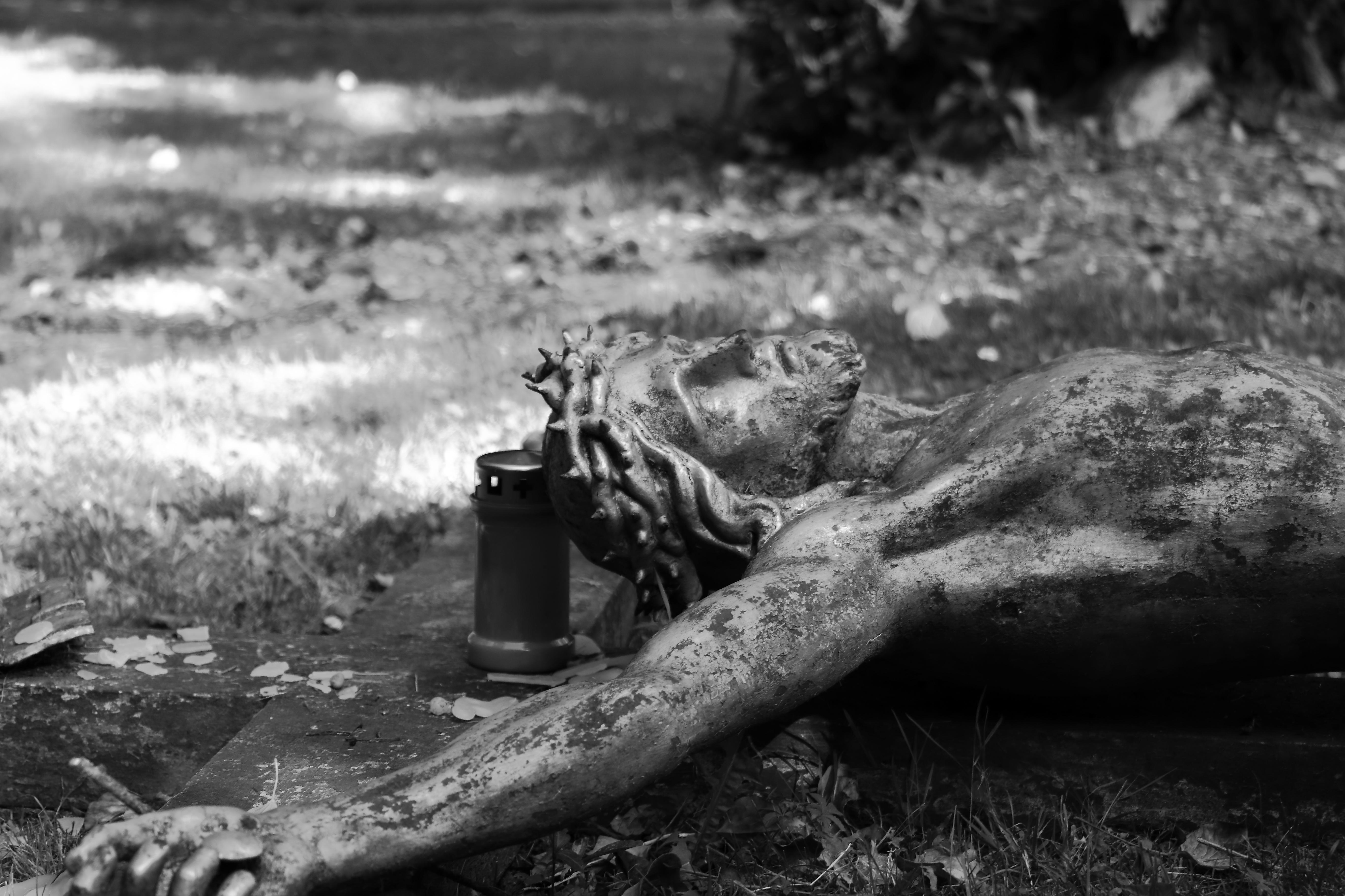 Fotos Gratis : árbol, En Blanco Y Negro, Fotografía