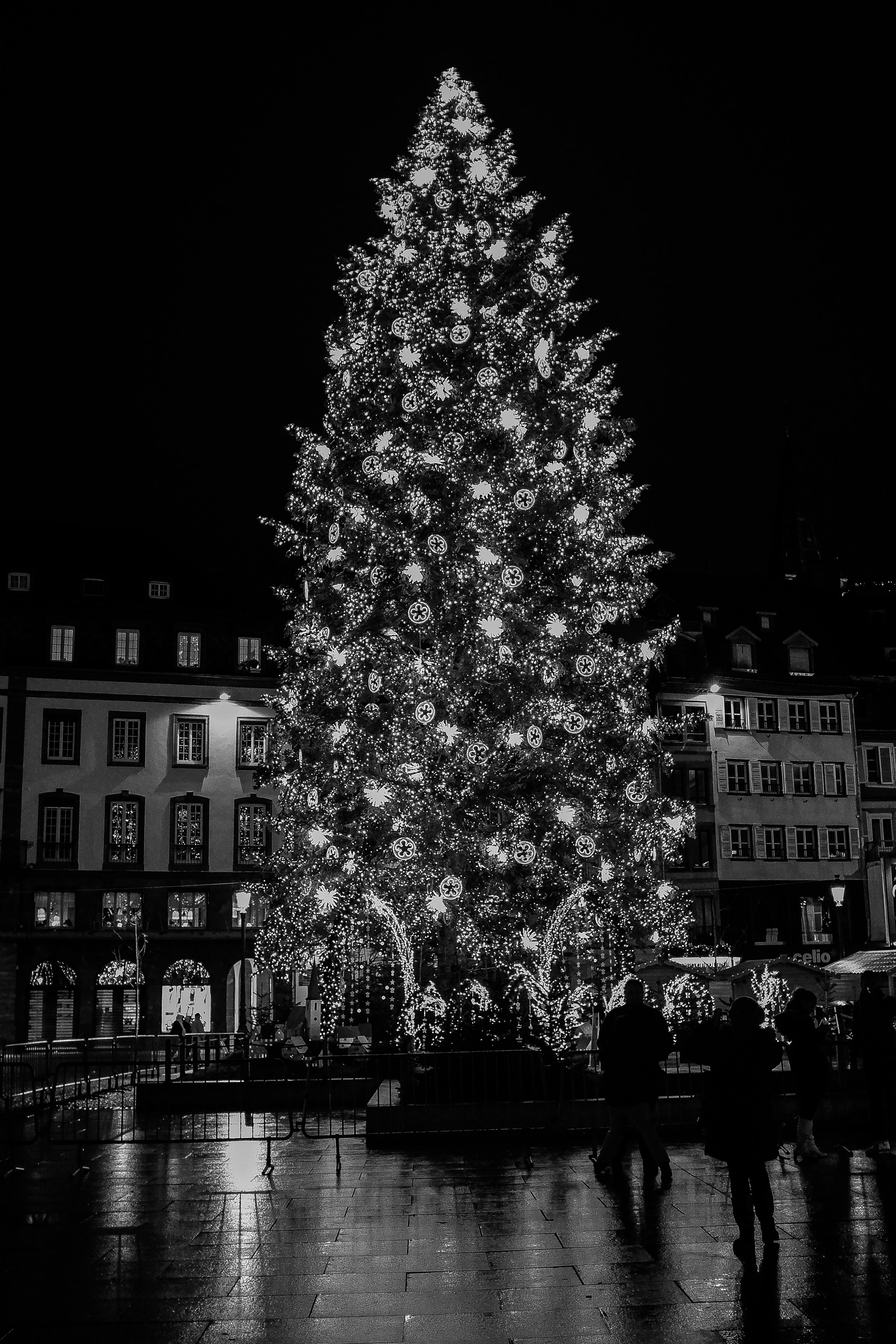 Gambar Hitam Dan Putih Jalan Malam Bunga Satu Warna Pohon Natal Dekorasi Natal Mono Simetri Strasbourg Schwarzweiss Weiss Schwarz Selamat Natal Frankreich Weihnachten Weihnachtsbaum Fest Monochrom Selamat Berlibur Streetshot