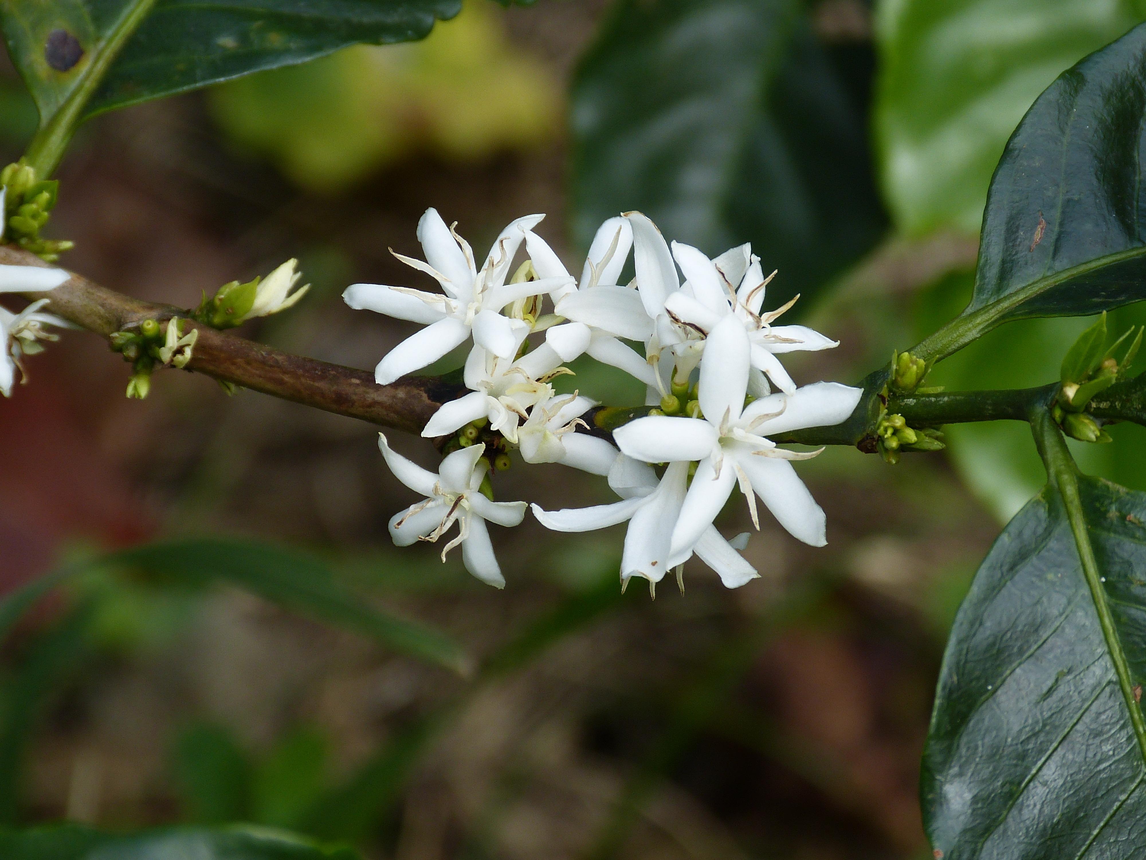 Fotos Gratis 225 Rbol Hoja Florecer Produce Hojas