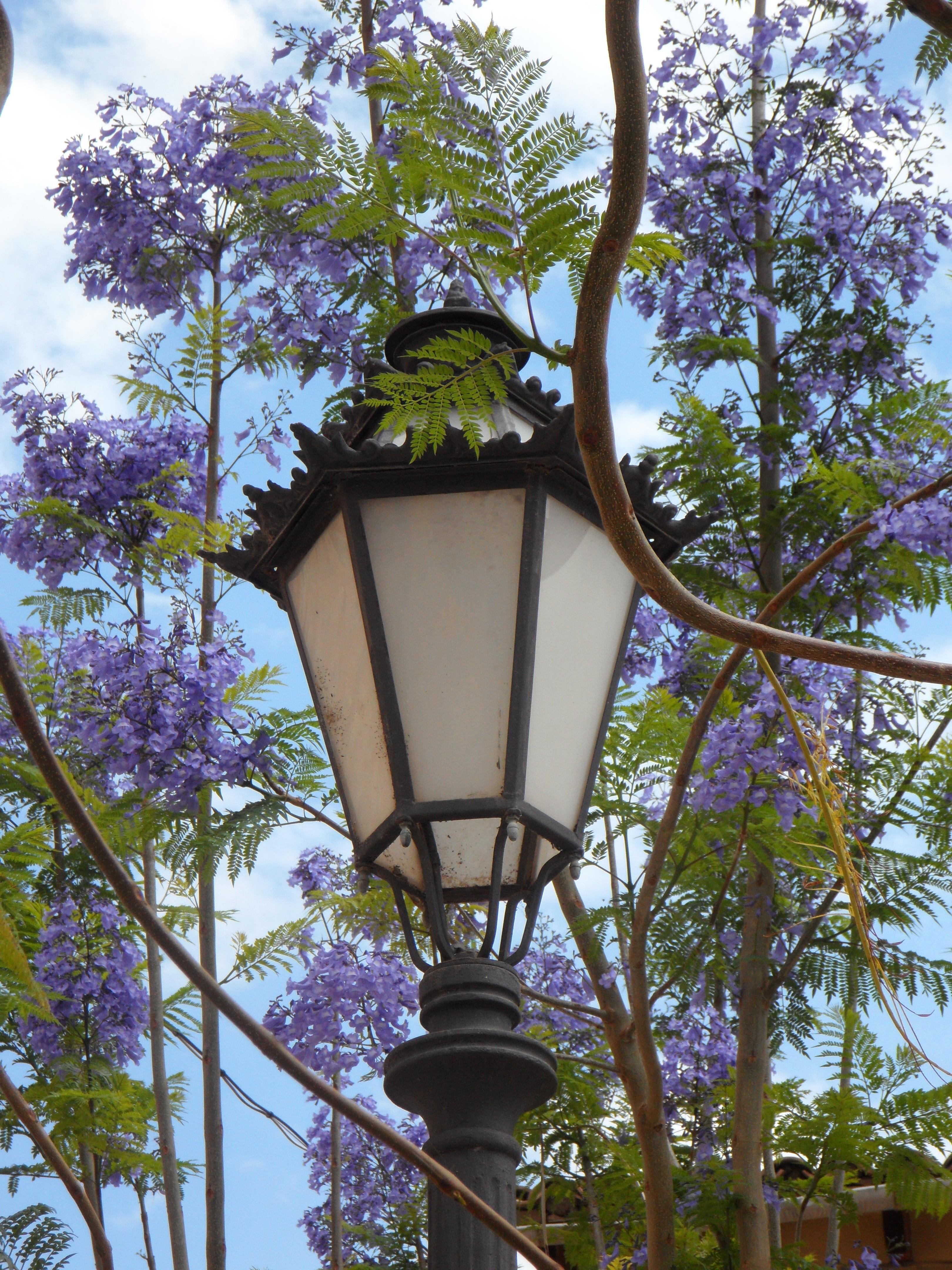 Images Gratuites Arbre Fleur Lumiere Fenetre Lanterne