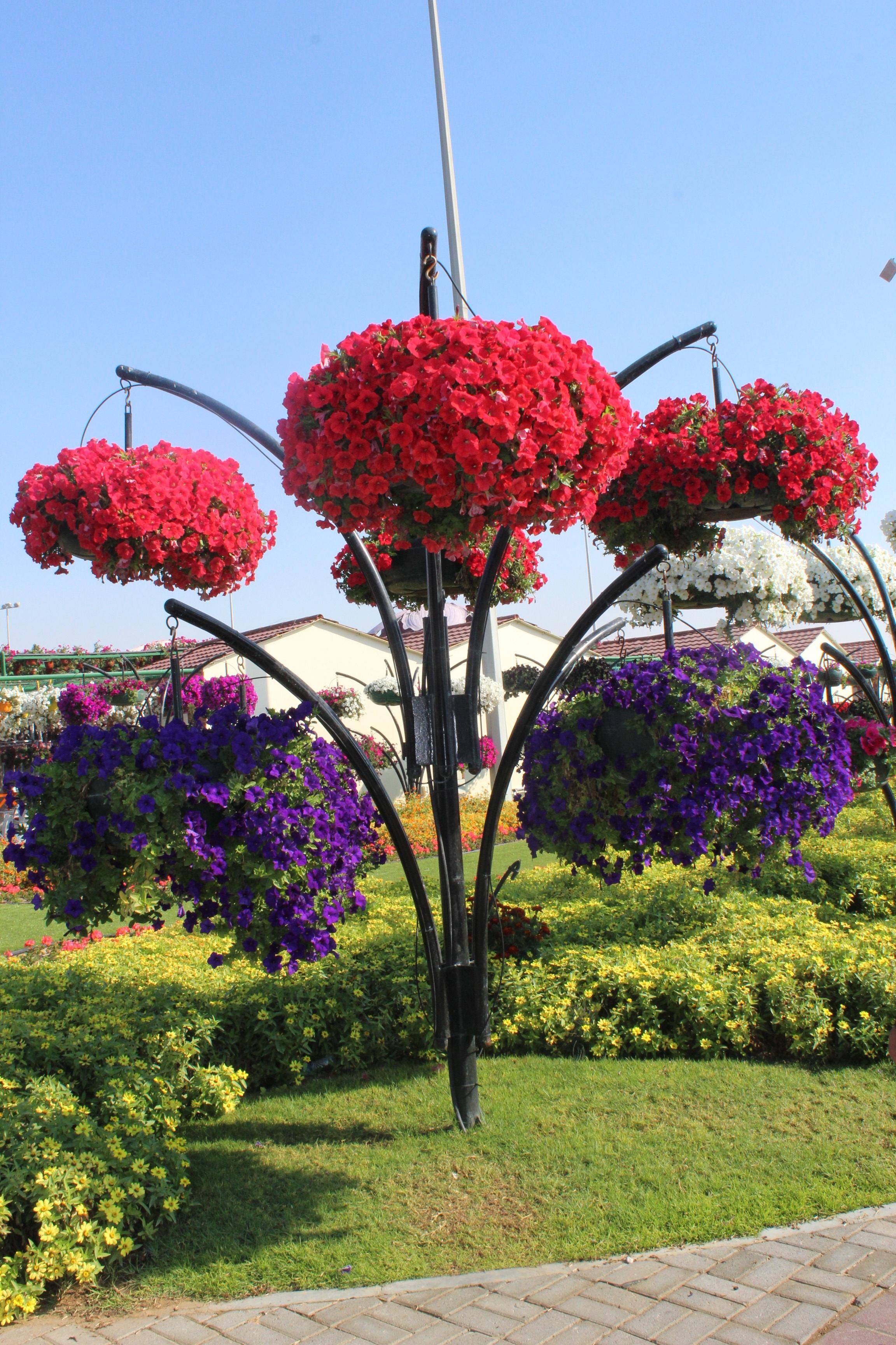 best fleurs de jardin en automne photos. Black Bedroom Furniture Sets. Home Design Ideas