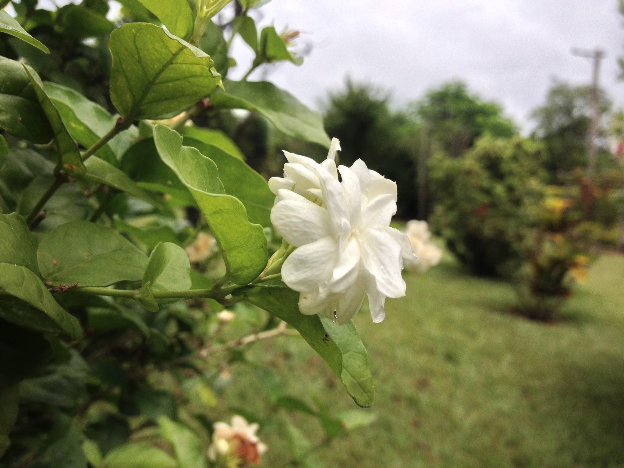 images gratuites : arbre, fleur, produire, botanique, flore, fleur