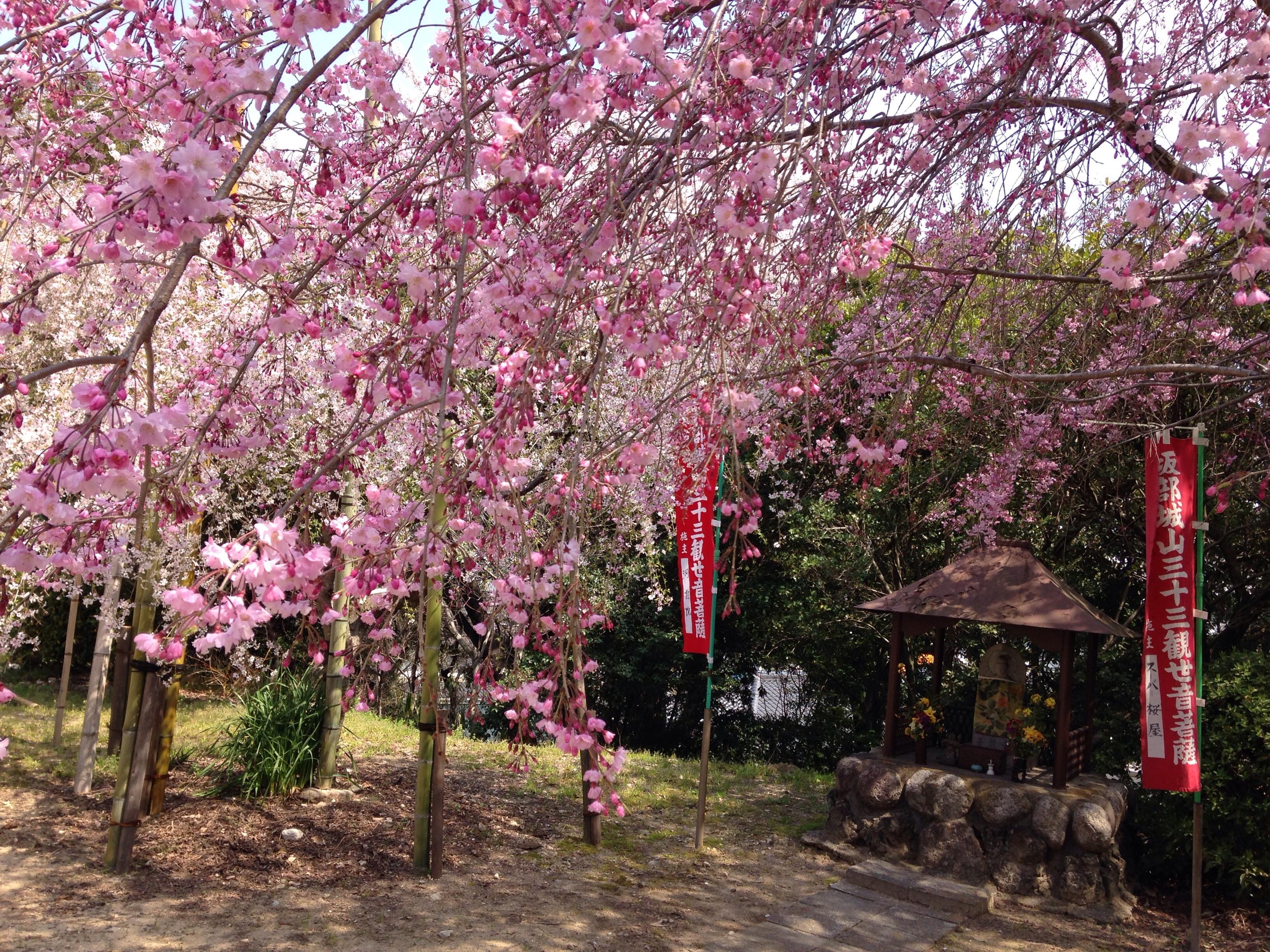 Images Gratuites Arbre Printemps Produire Botanique Japon
