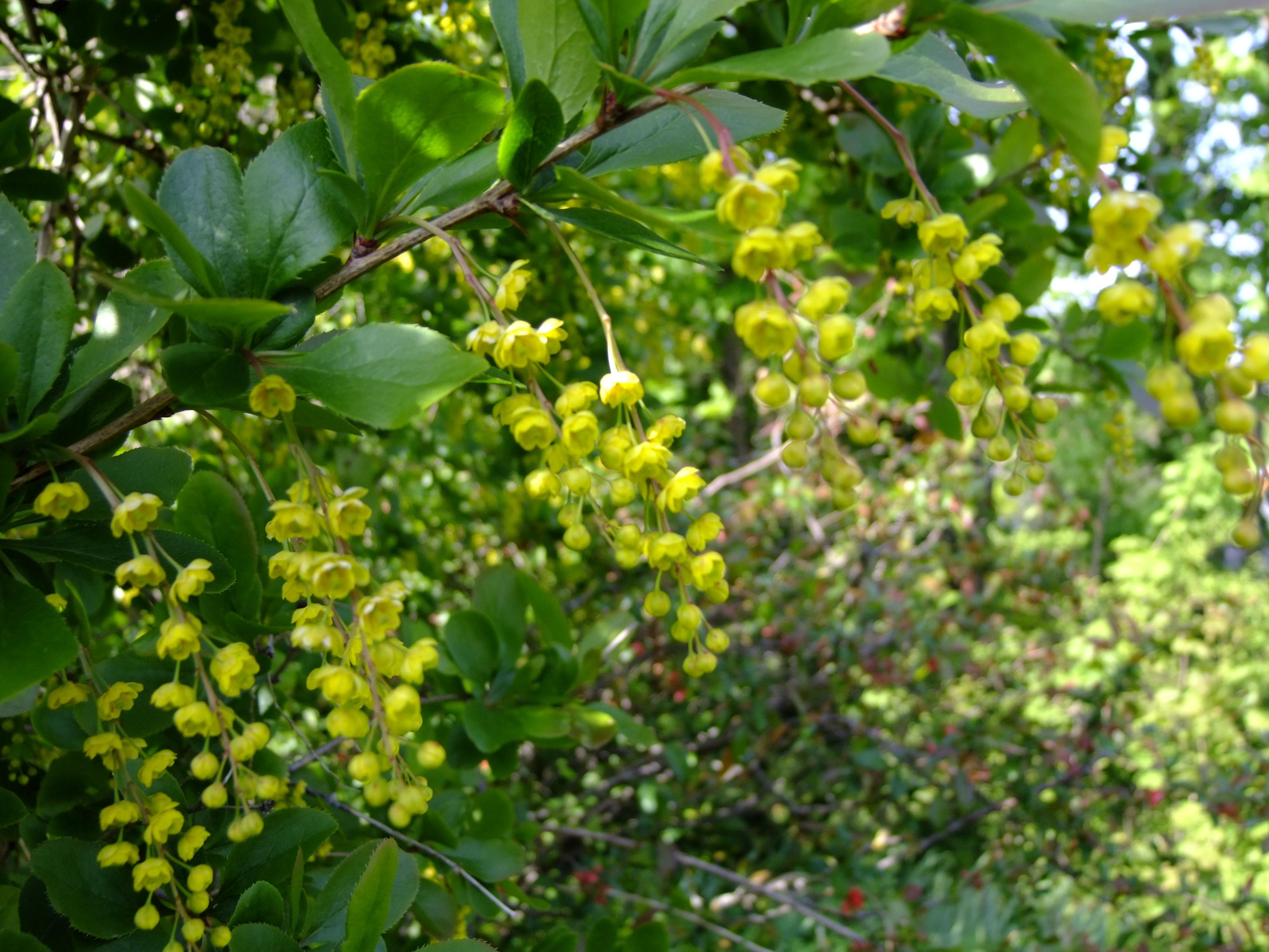 Kostenlose foto Baum blühen Frucht Blume Busch Lebensmittel