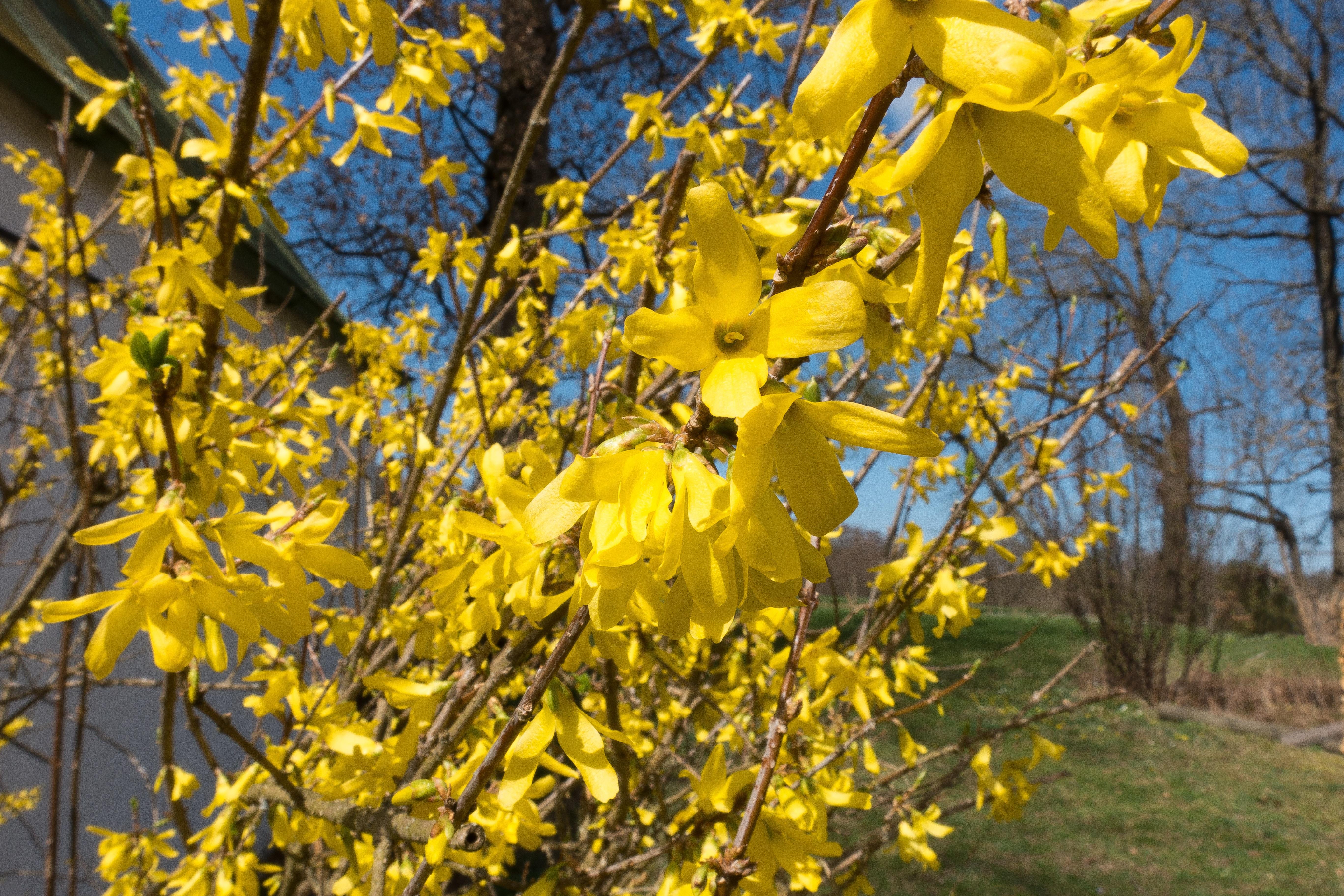 images gratuites arbre fleur fruit lumi re du soleil. Black Bedroom Furniture Sets. Home Design Ideas