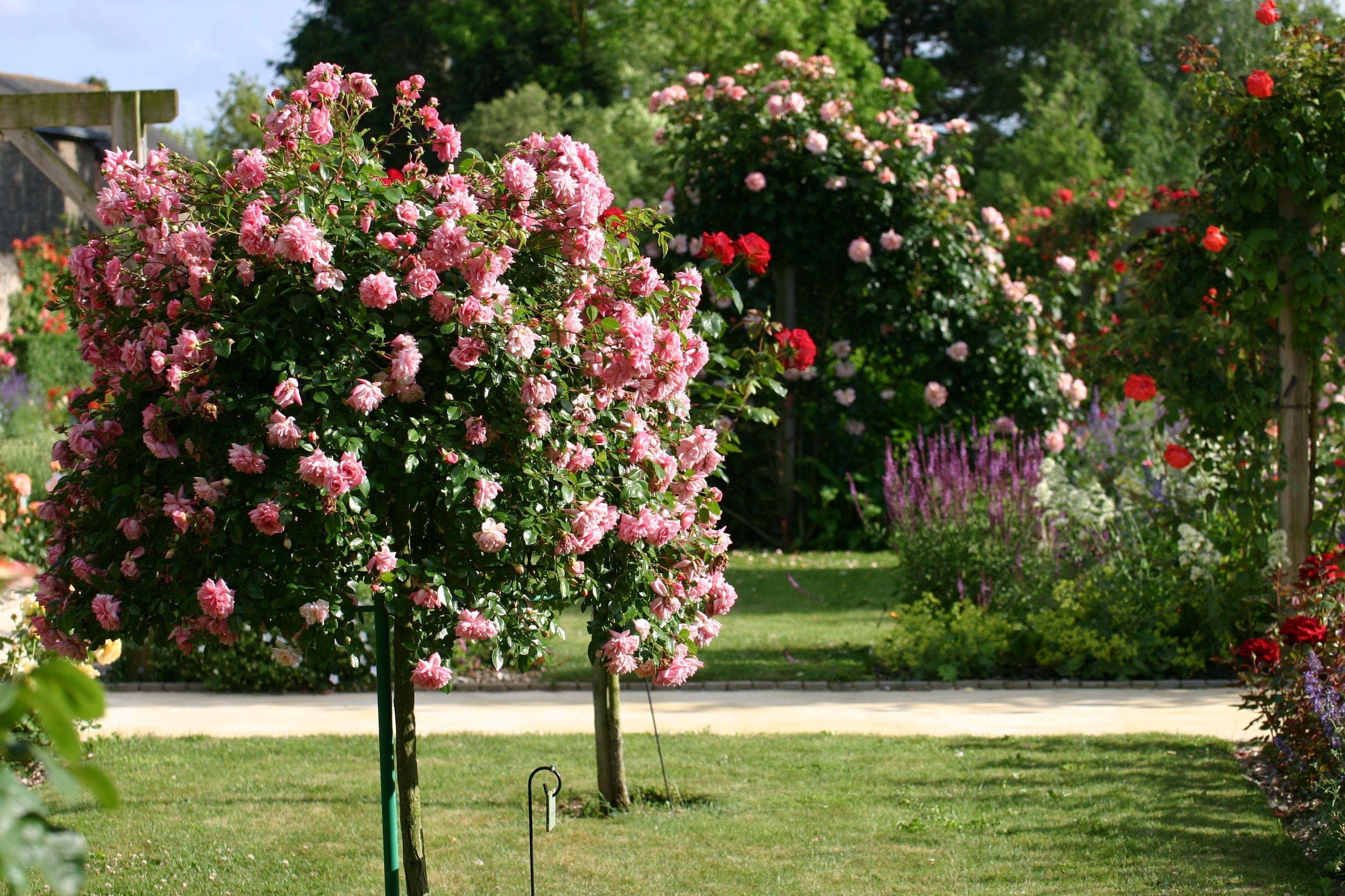 images gratuites : arbre, fleur, pelouse, été, arrière-cour