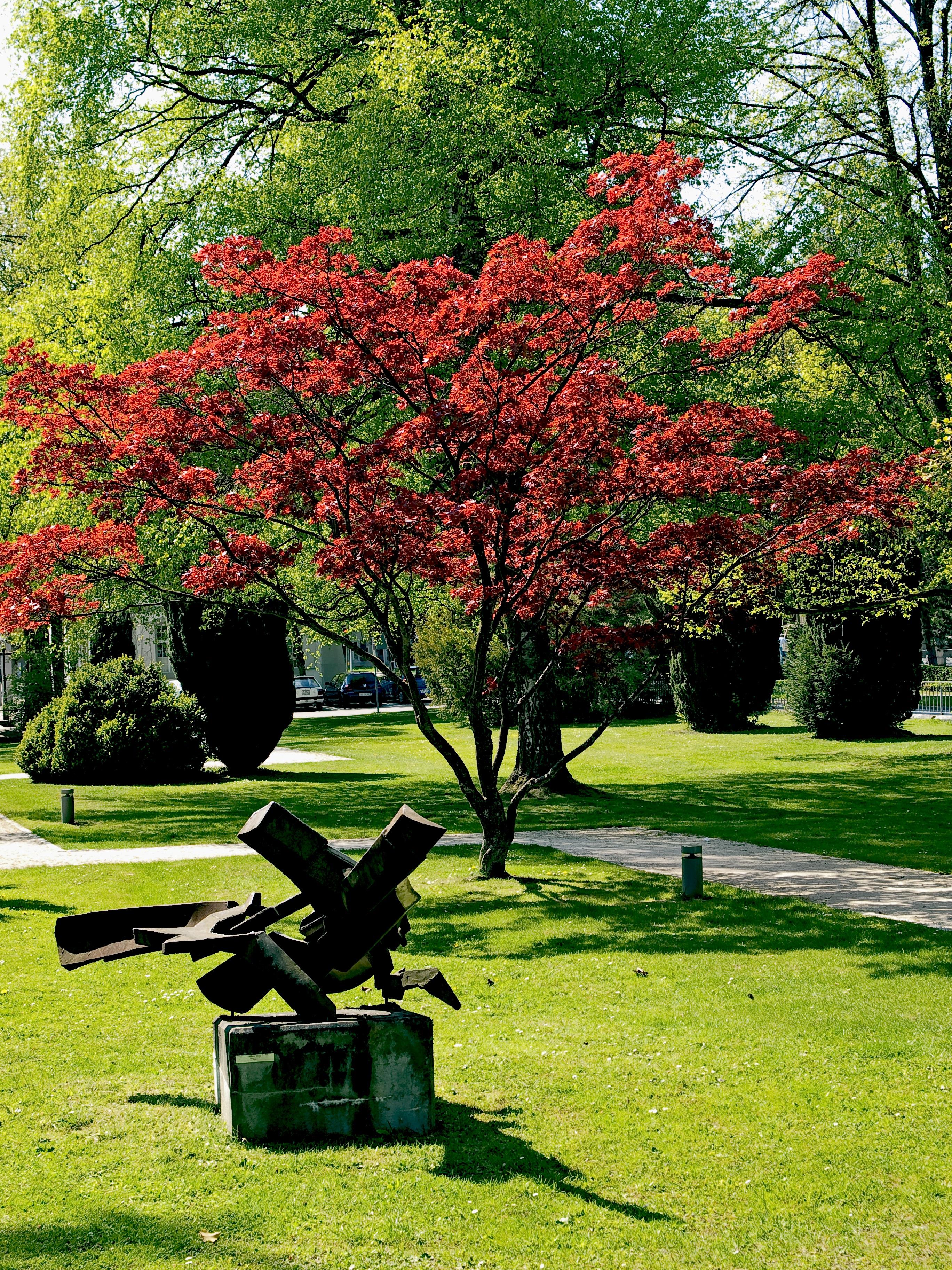 Fotos Gratis Flor C 233 Sped Hoja Verde Oto 241 O Parque