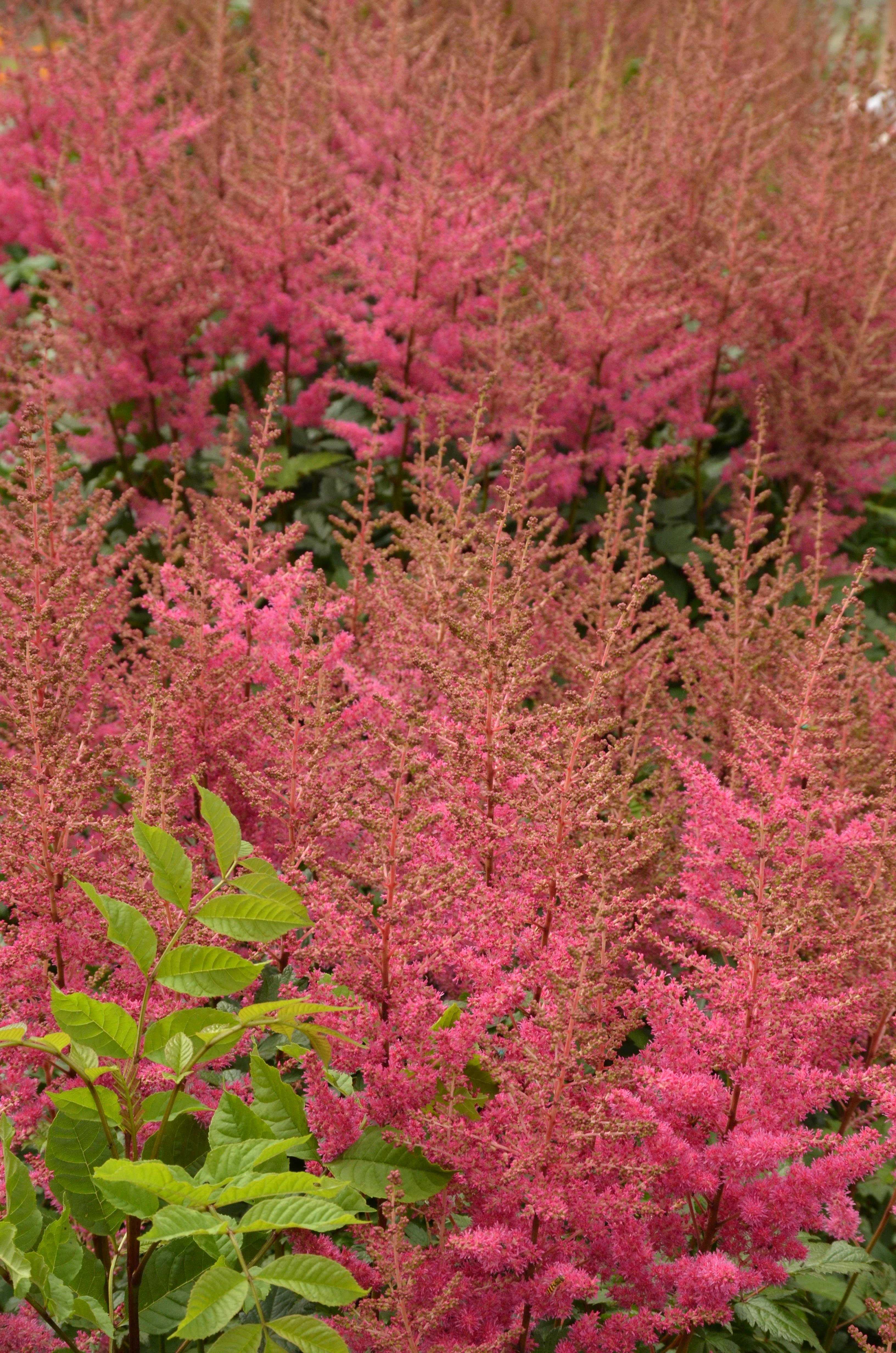images gratuites : arbre, fleur, feuille, botanique, rose, flore