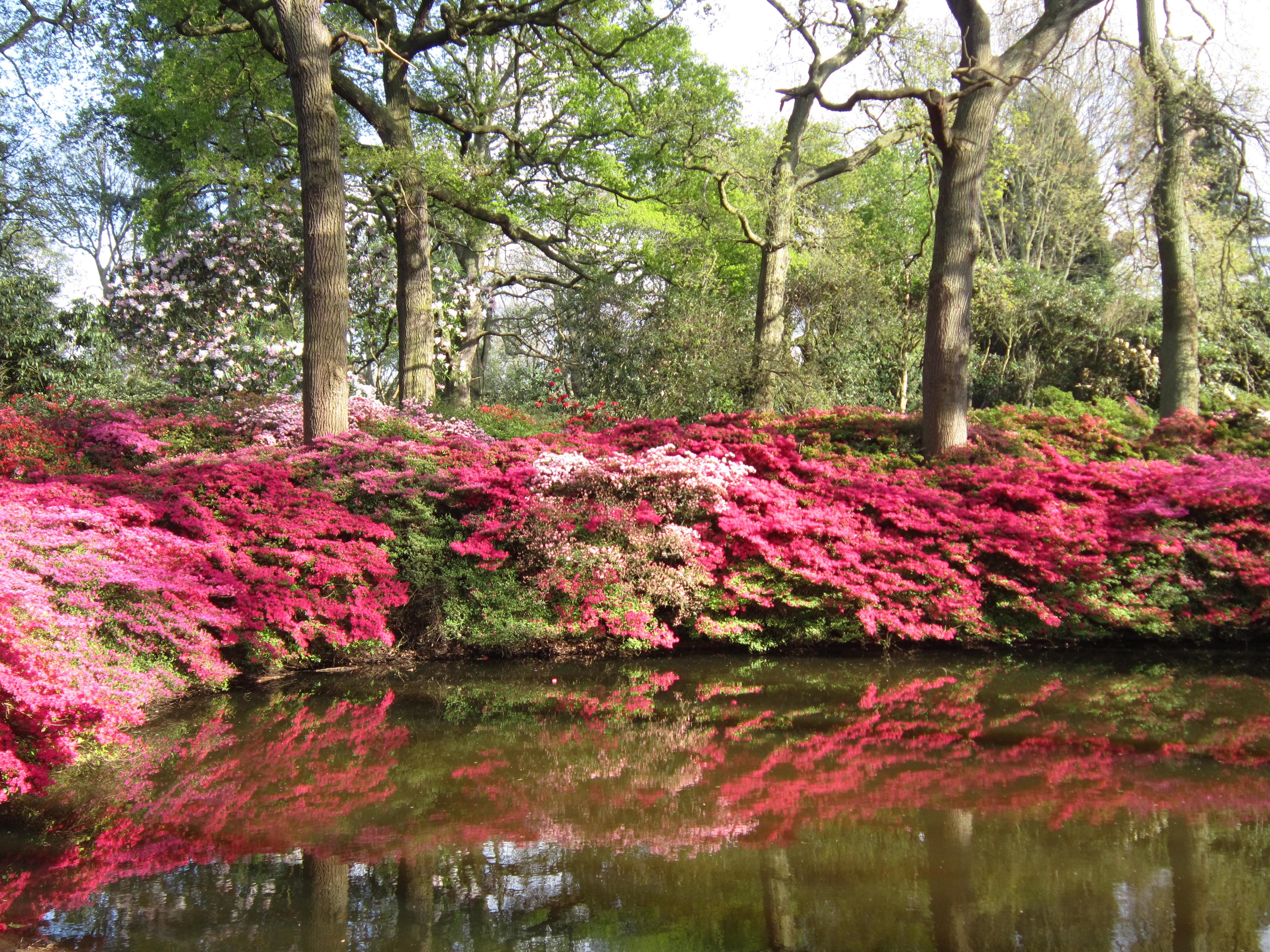 images gratuites : arbre, fleur, feuille, étang, l'automne, flore