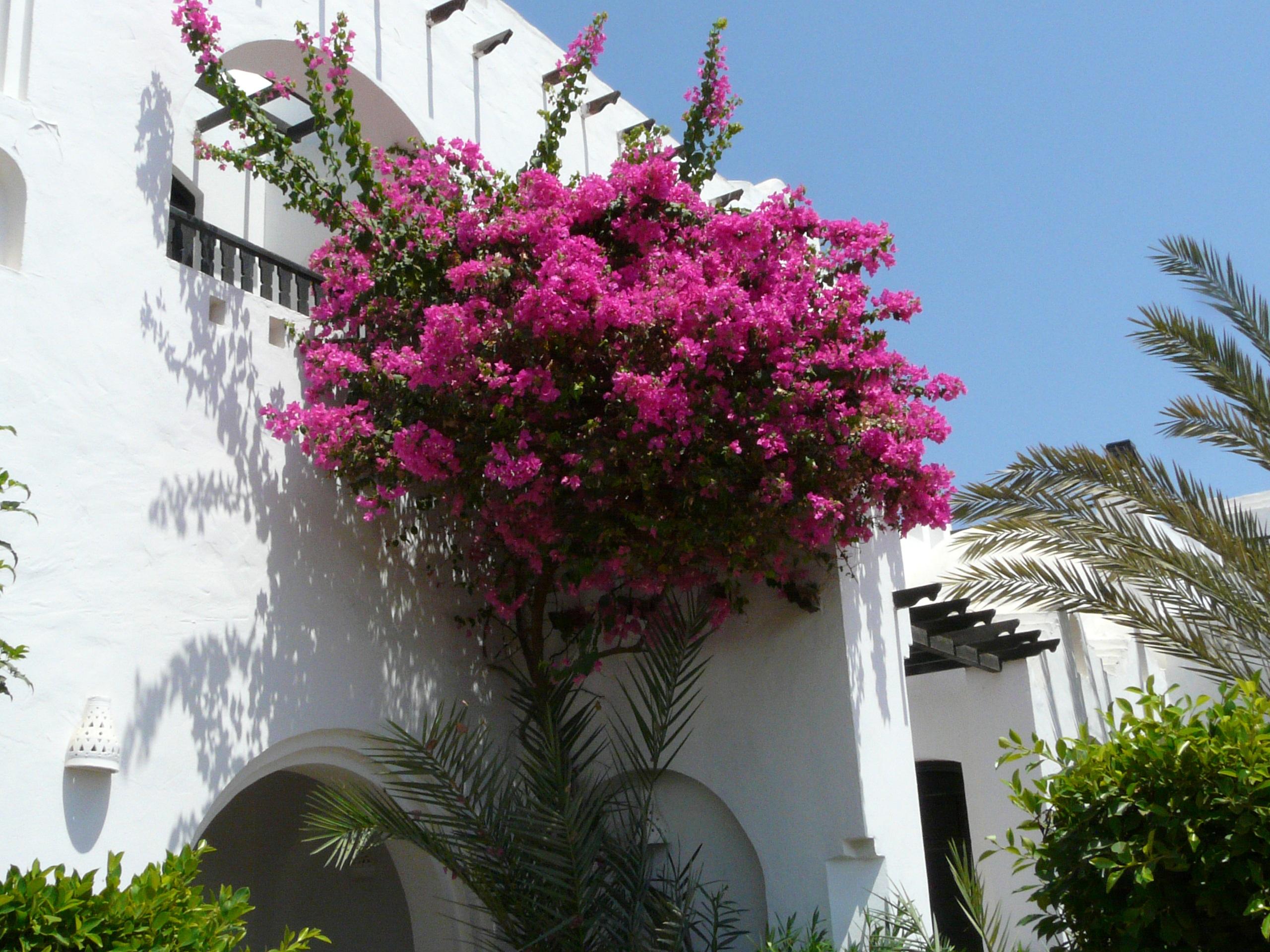 Foto raf a a i ek villa botanik bah e pembe for Plant de villa