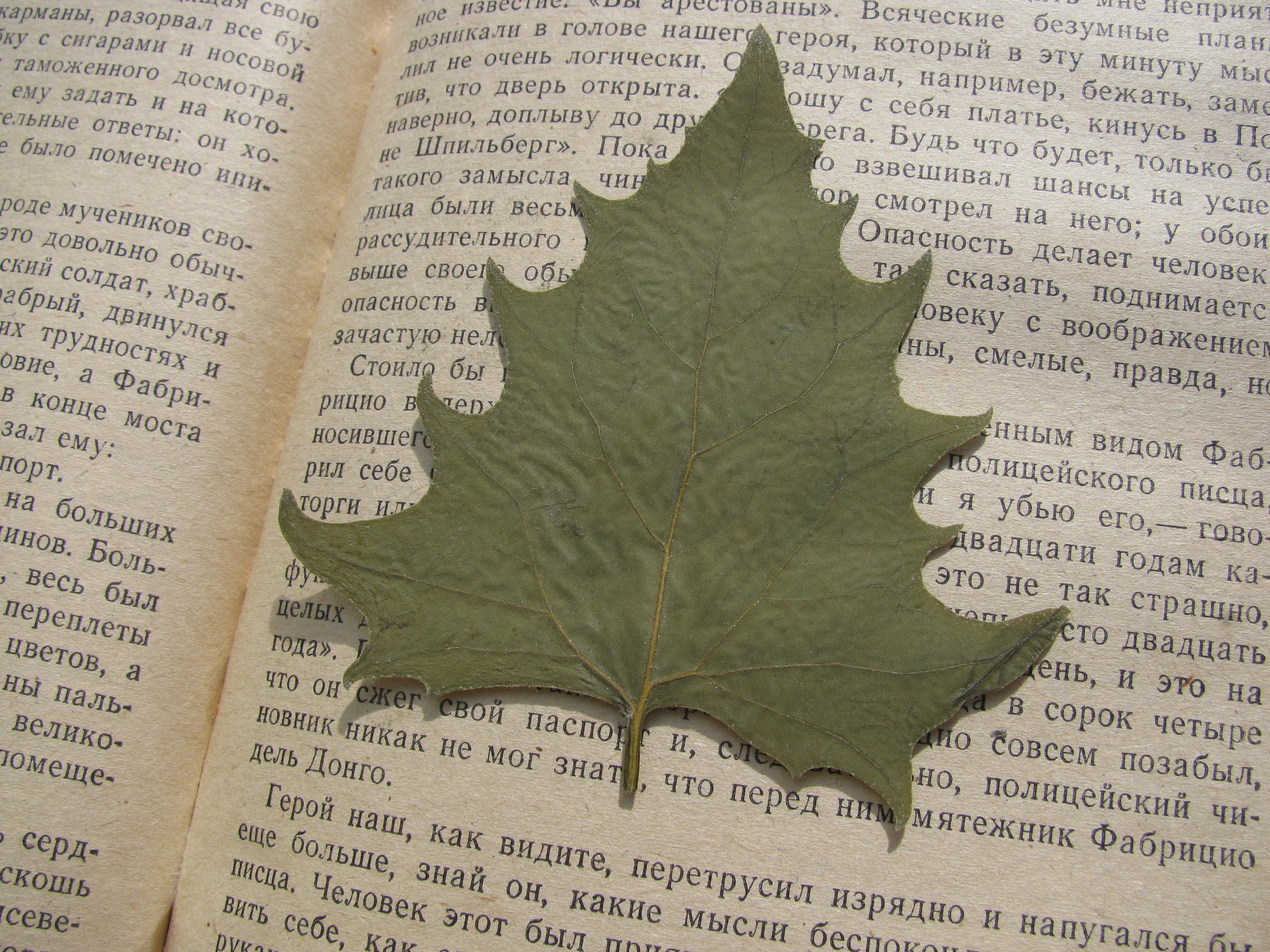 Картинка листка из книги