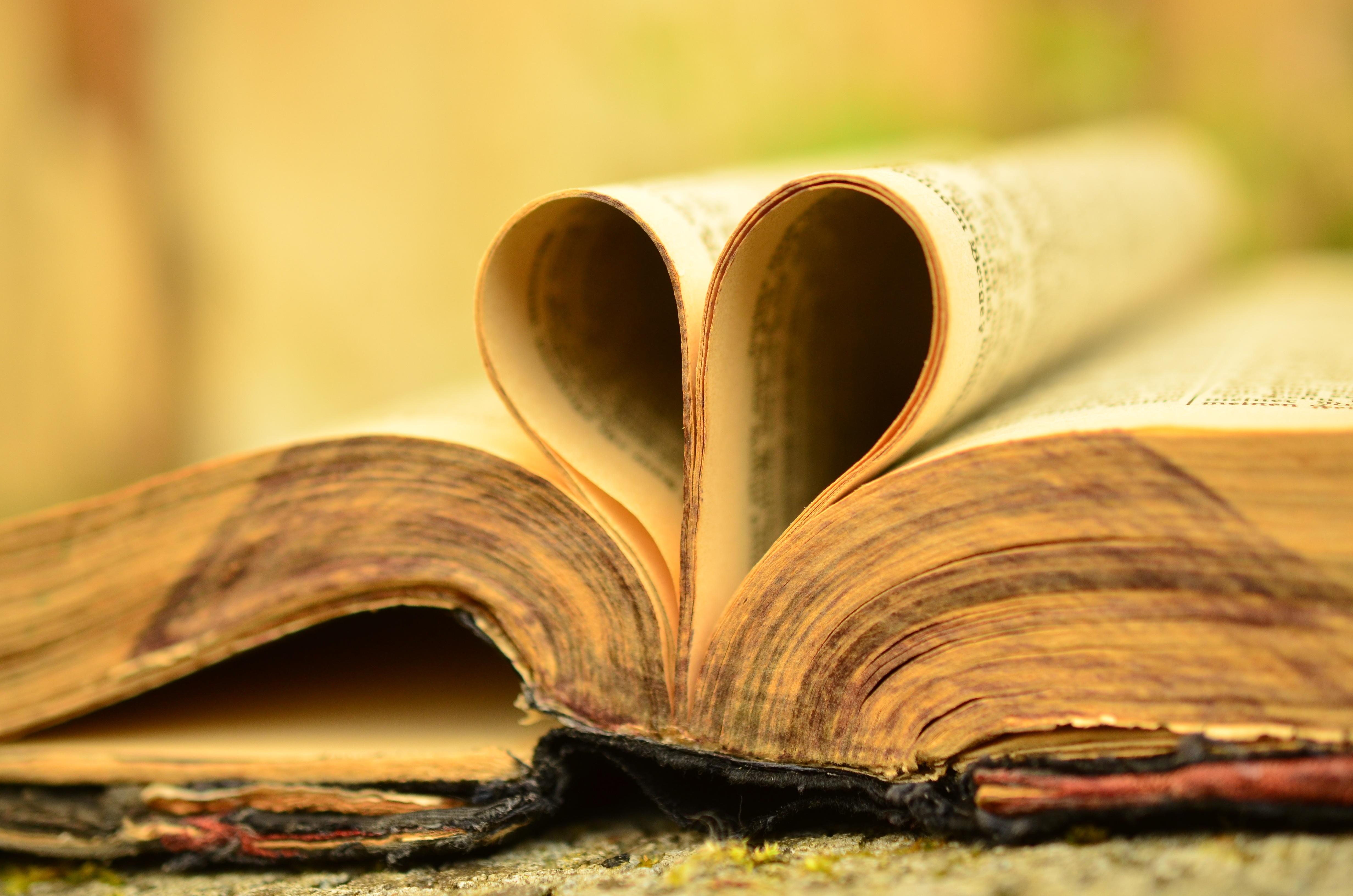 Kostenlose foto : Baum, lesen, Pflanze, Holz, Fotografie, Antiquität ...