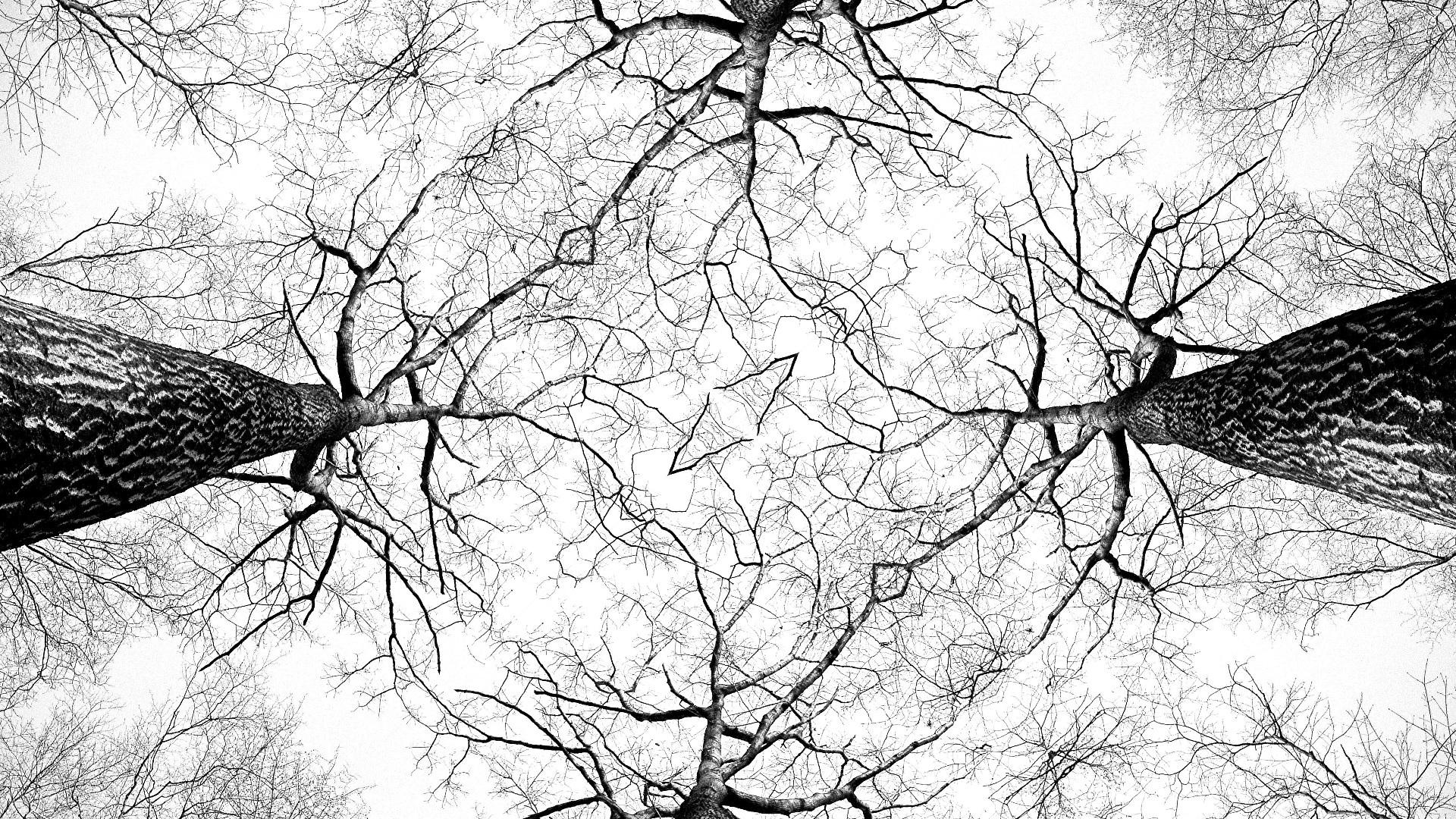 Images Gratuites Arbre Branche Oiseau Noir Et Blanc écorce