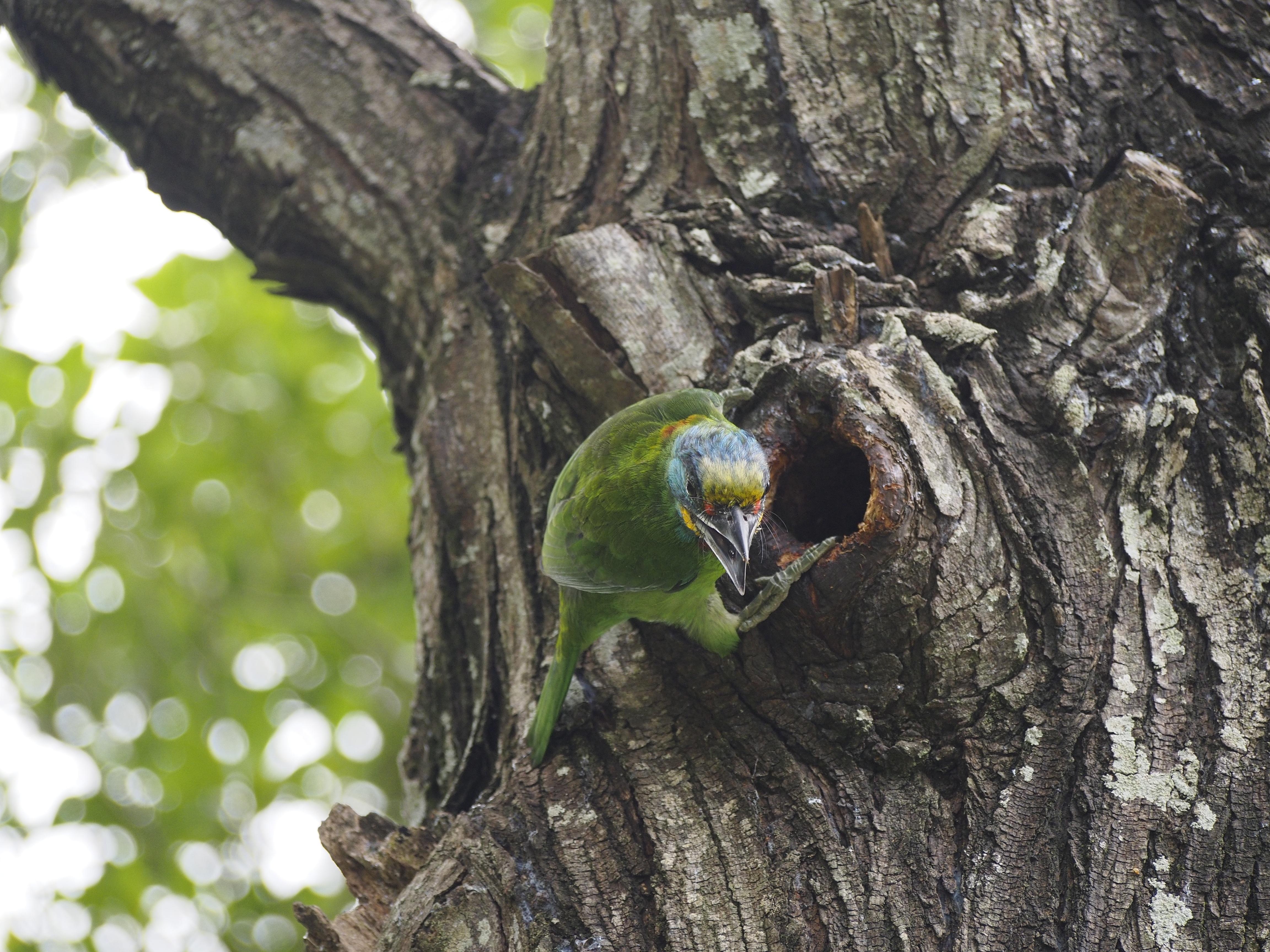 гнездо попугая картинки коллекция шрифтов