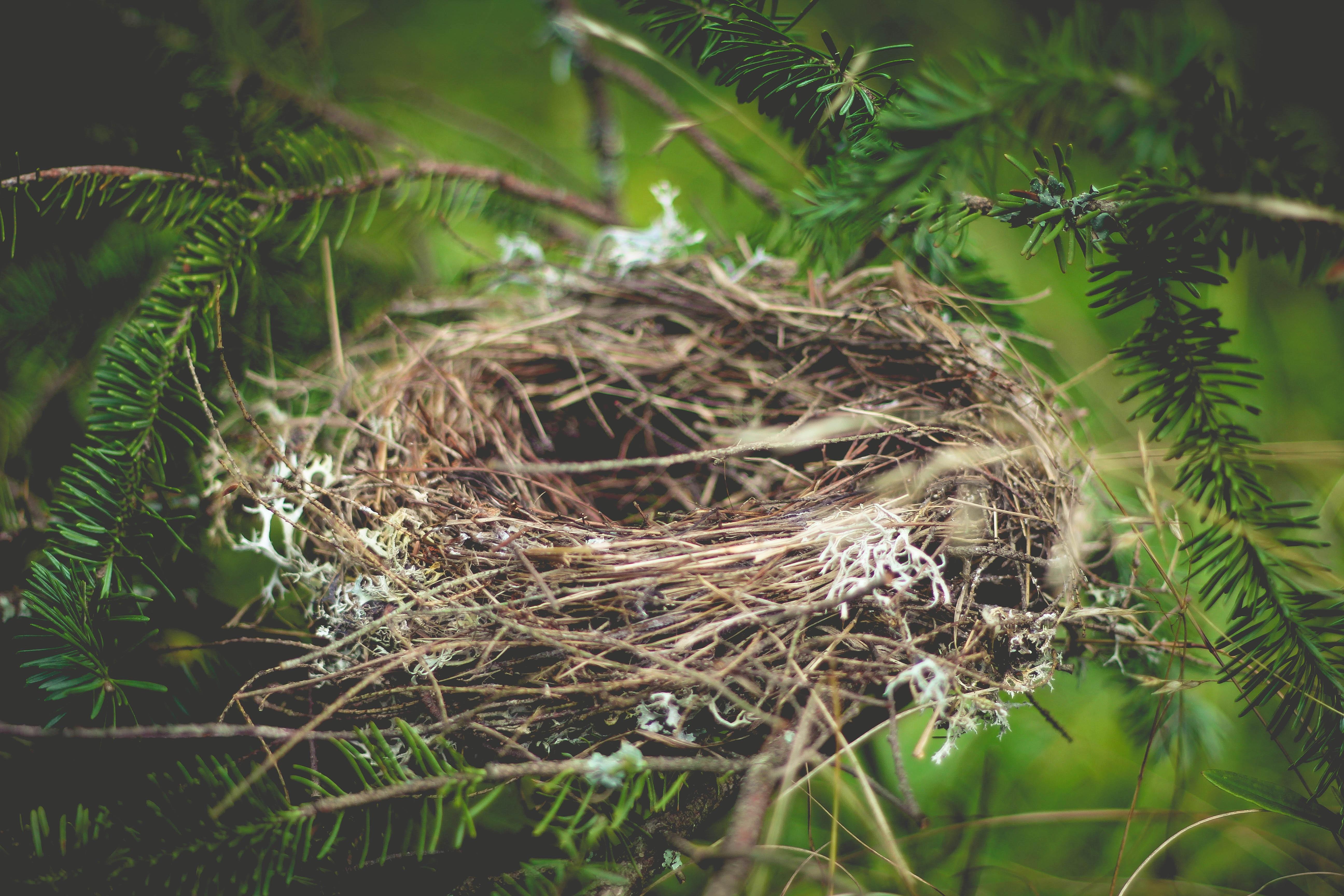 гнездо птиц фото армавира давно