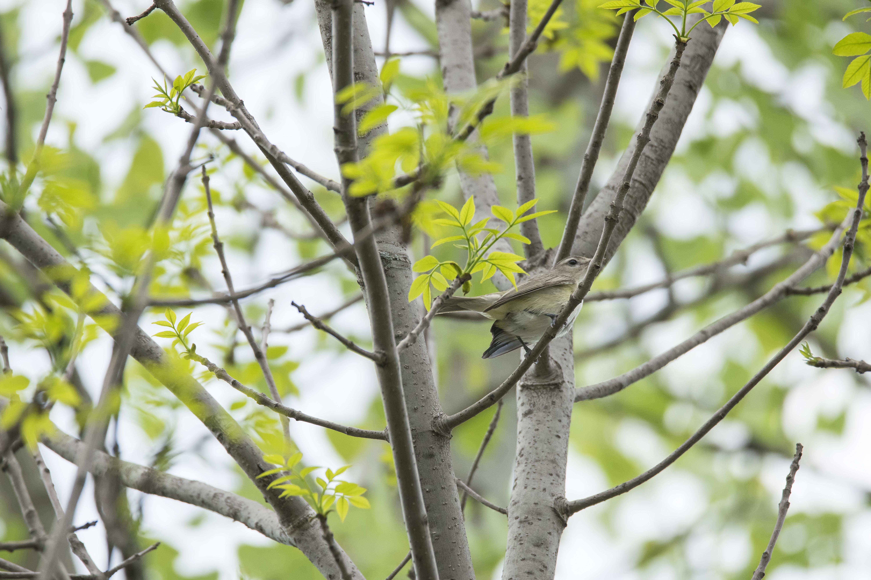 Images gratuites arbre branche oiseau plante lumi re for Plante ligneuse