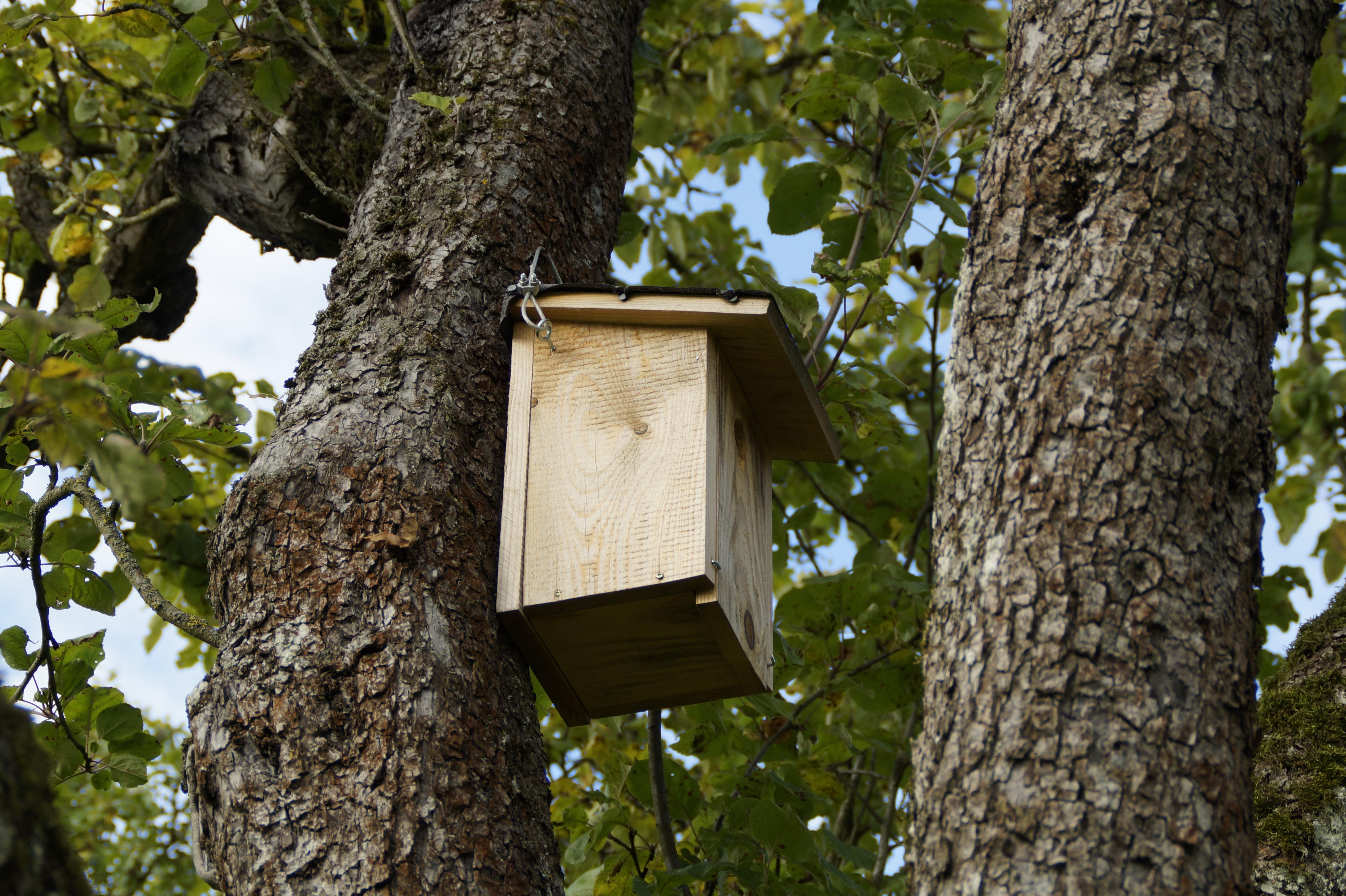 Gratis billeder : træ, afdeling, fugl, bagagerum, log, fugle, rede, birdhouse, race, voliere ...