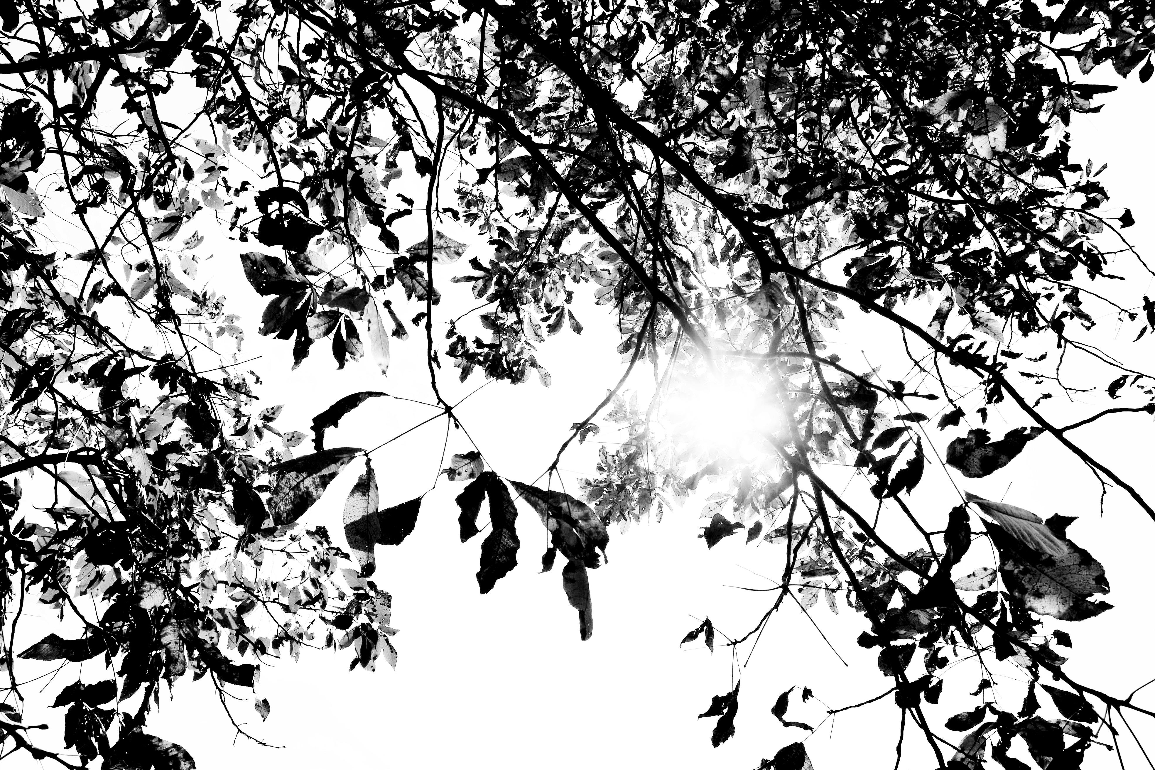 images gratuites arbre branche noir et blanc plante fleur monochrome esquisser dessin. Black Bedroom Furniture Sets. Home Design Ideas