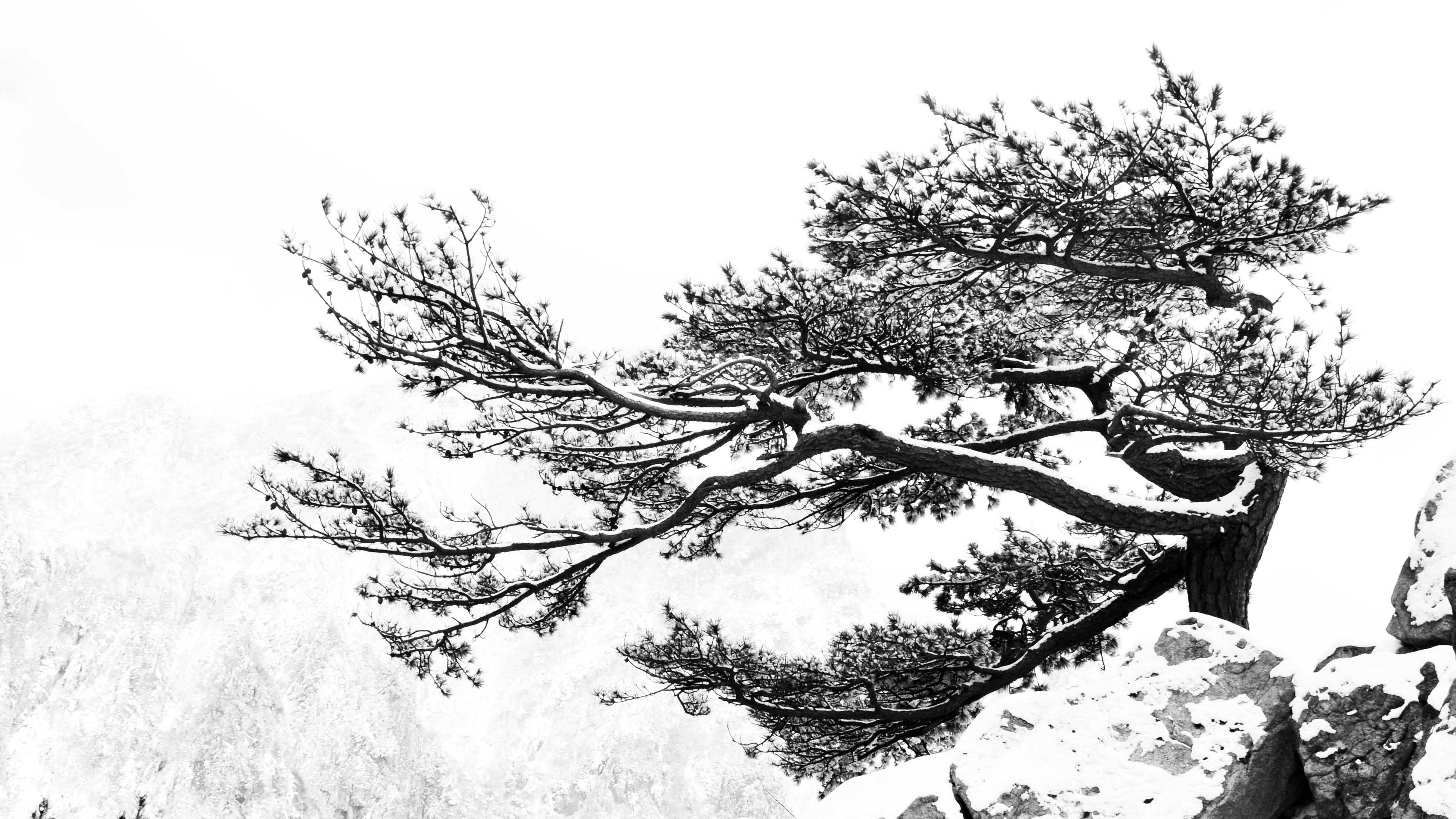 Images Gratuites Arbre Branche Noir Et Blanc Plante Monochrome