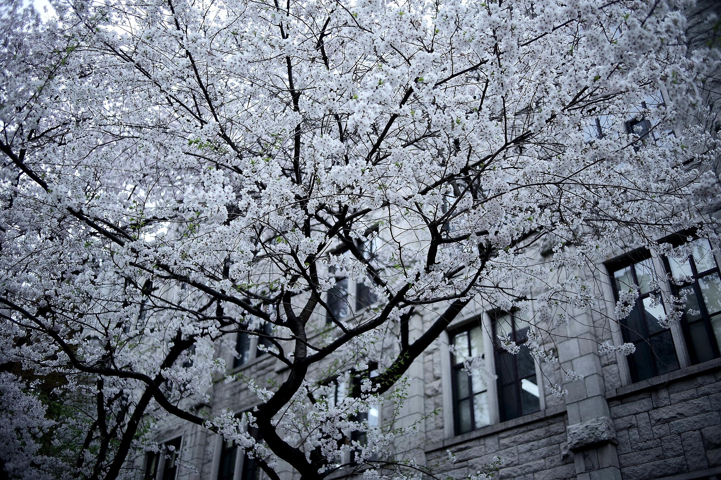 картинки весна монохром клубники фейерверк