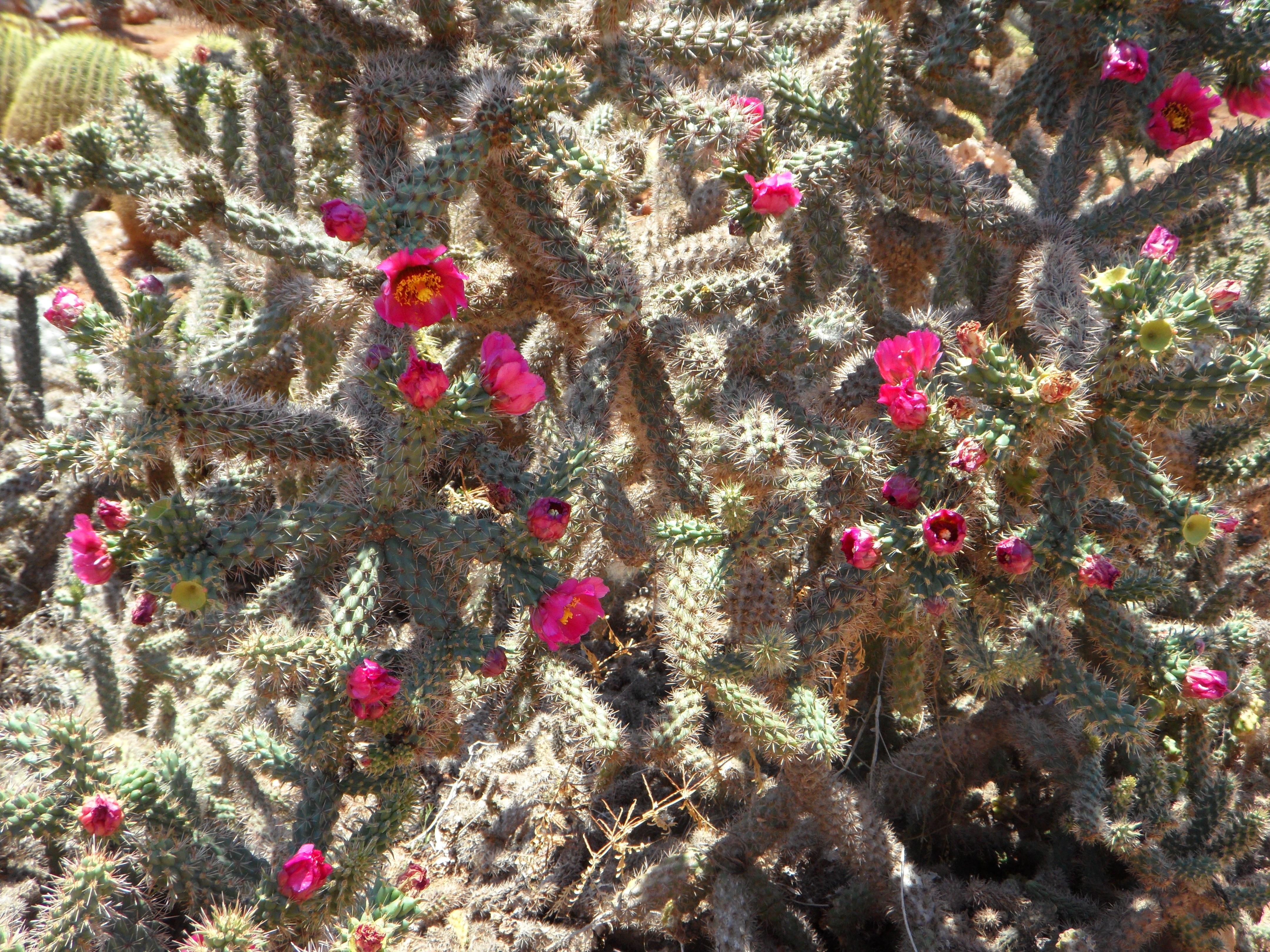 images gratuites : branche, fleur, plante, floraison, botanique