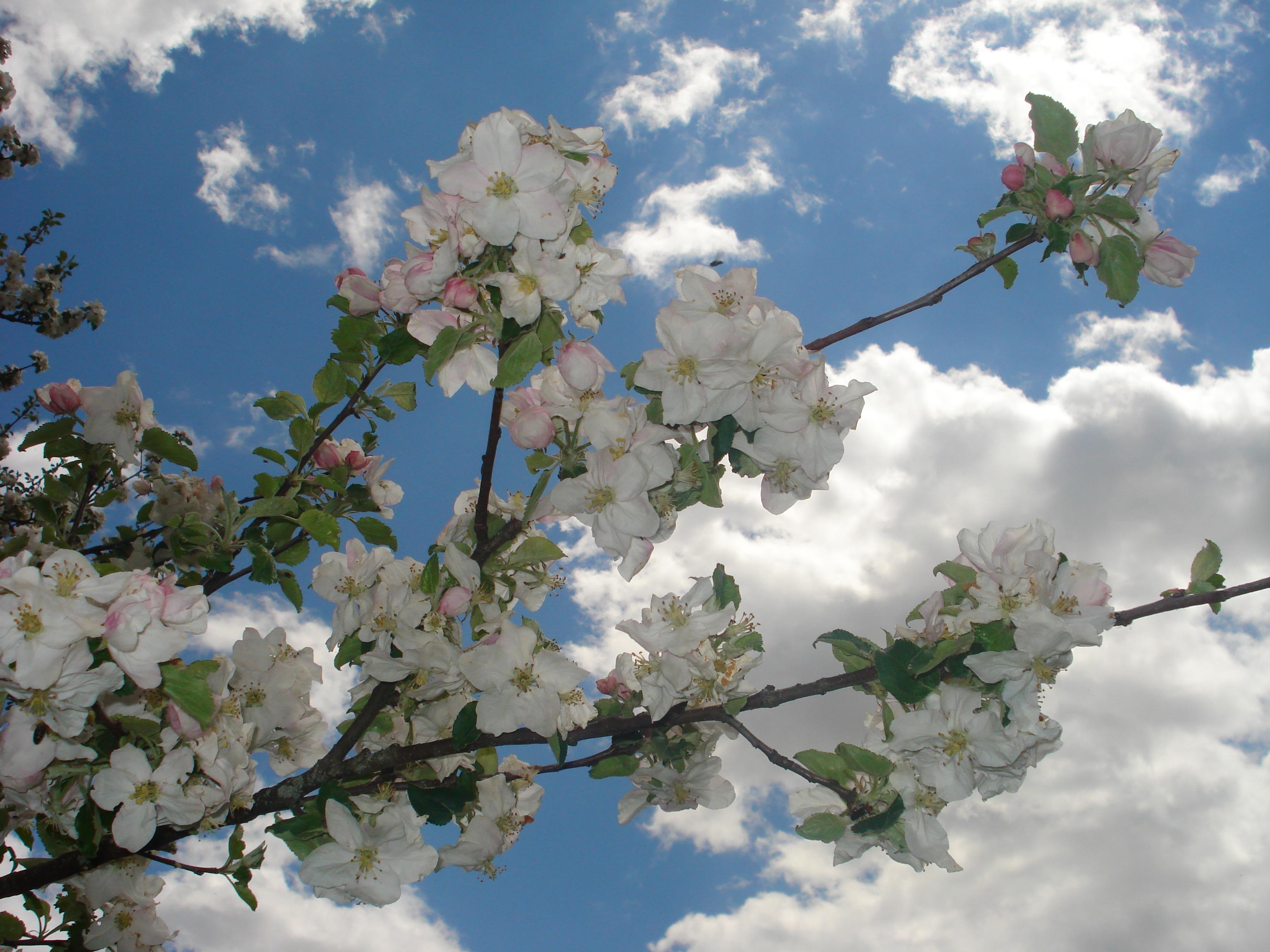 Images Gratuites Arbre Branche Plante Ciel Ensoleillement