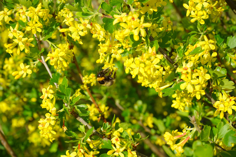Free Images Tree Branch Blossom Flower Bush Food Herb