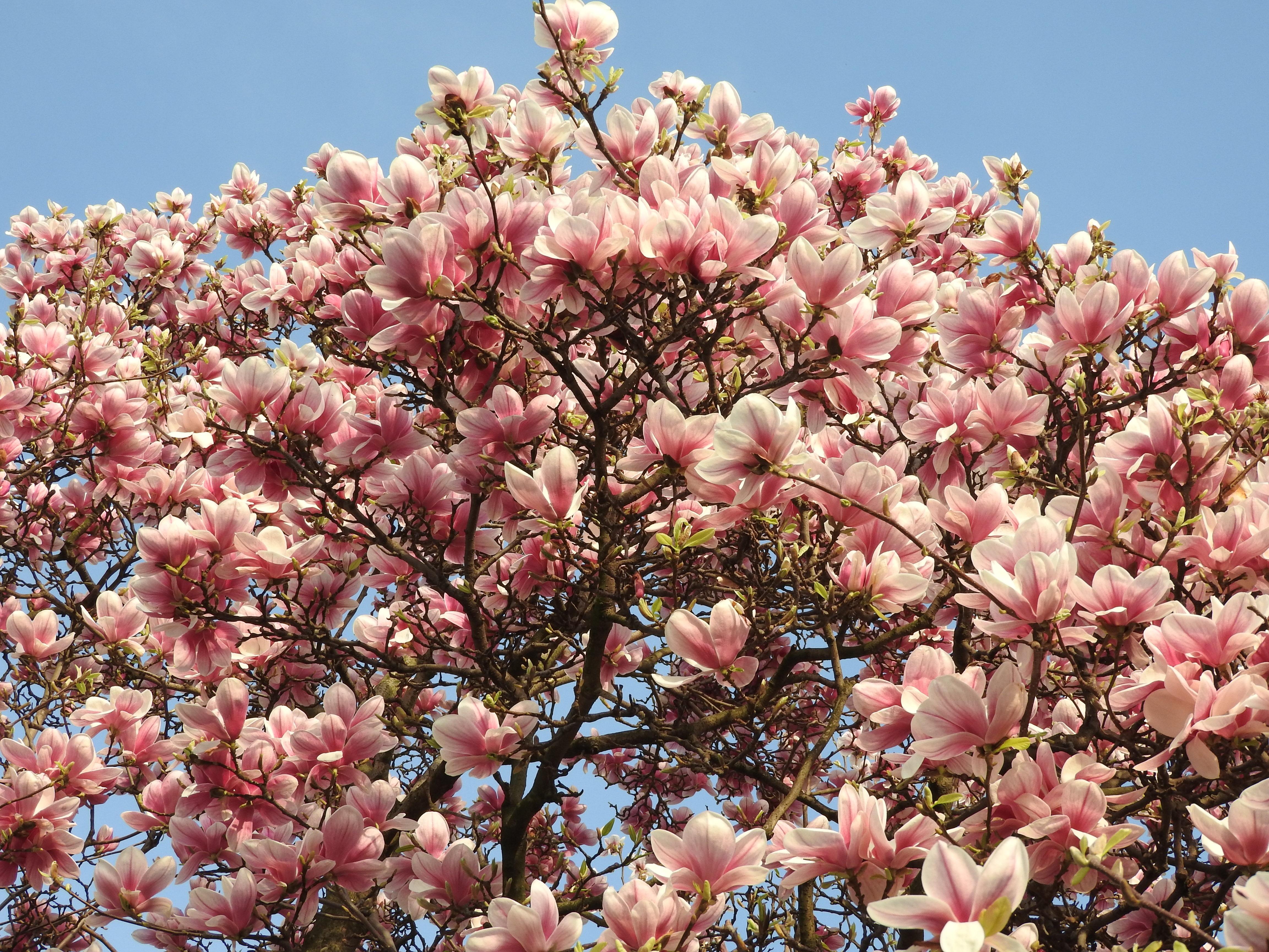 позволяет как цветут российские деревья фото время