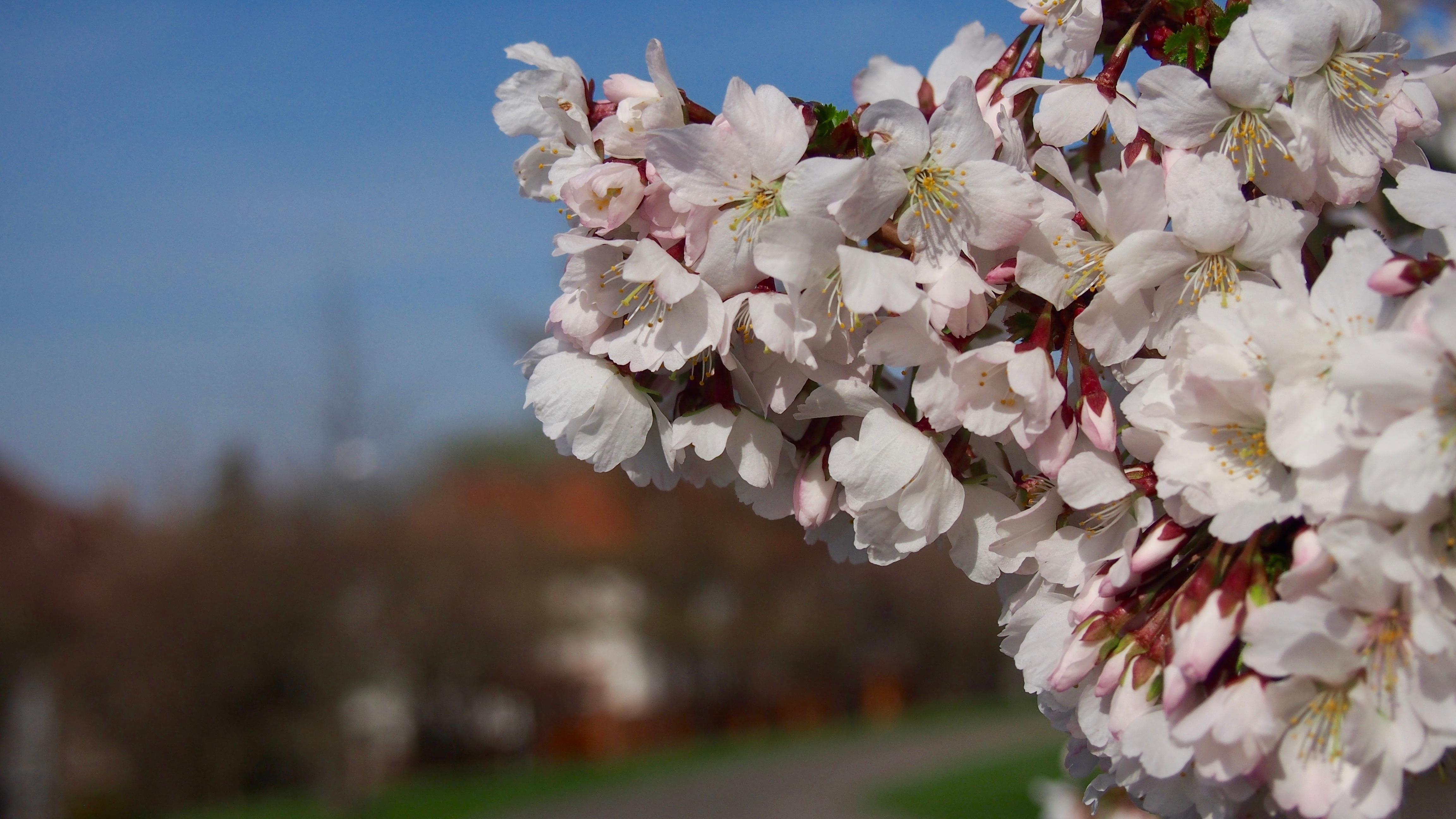 весна время расцветать картинки кухни шкафами купе