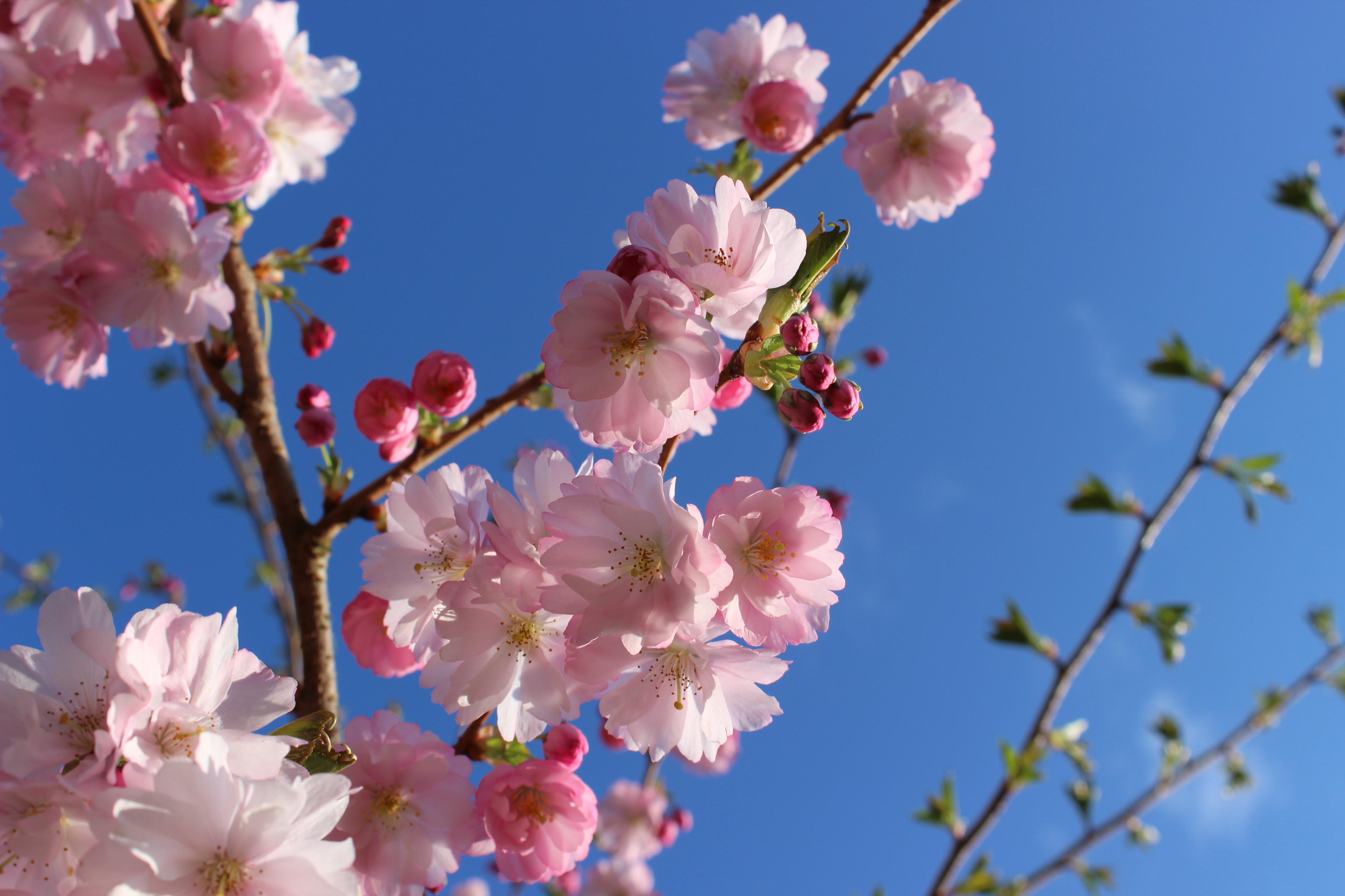Free Images Tree Branch Flower Petal Spring Produce Botany
