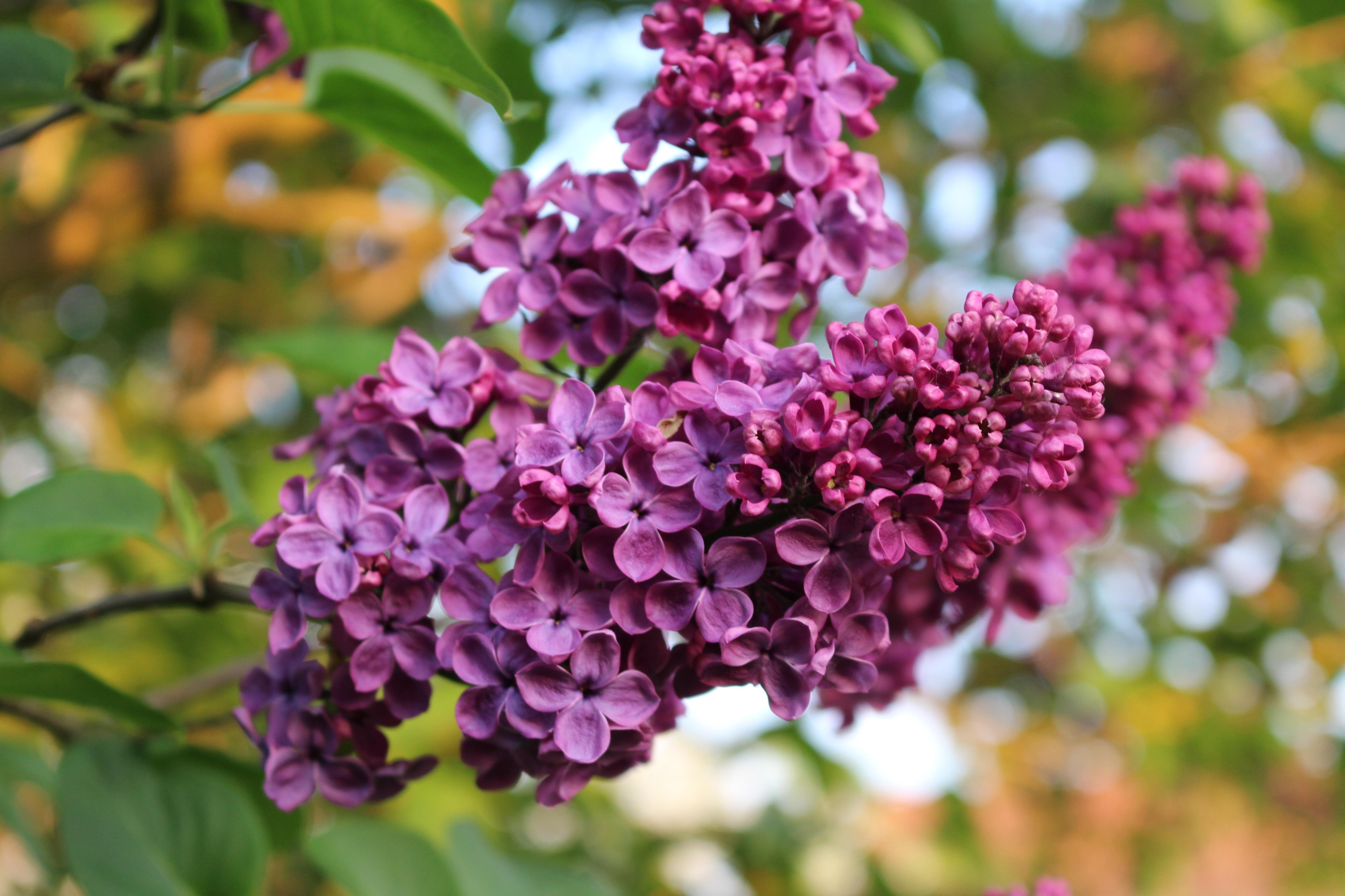 Весна фото природа деревня юбку кожзама