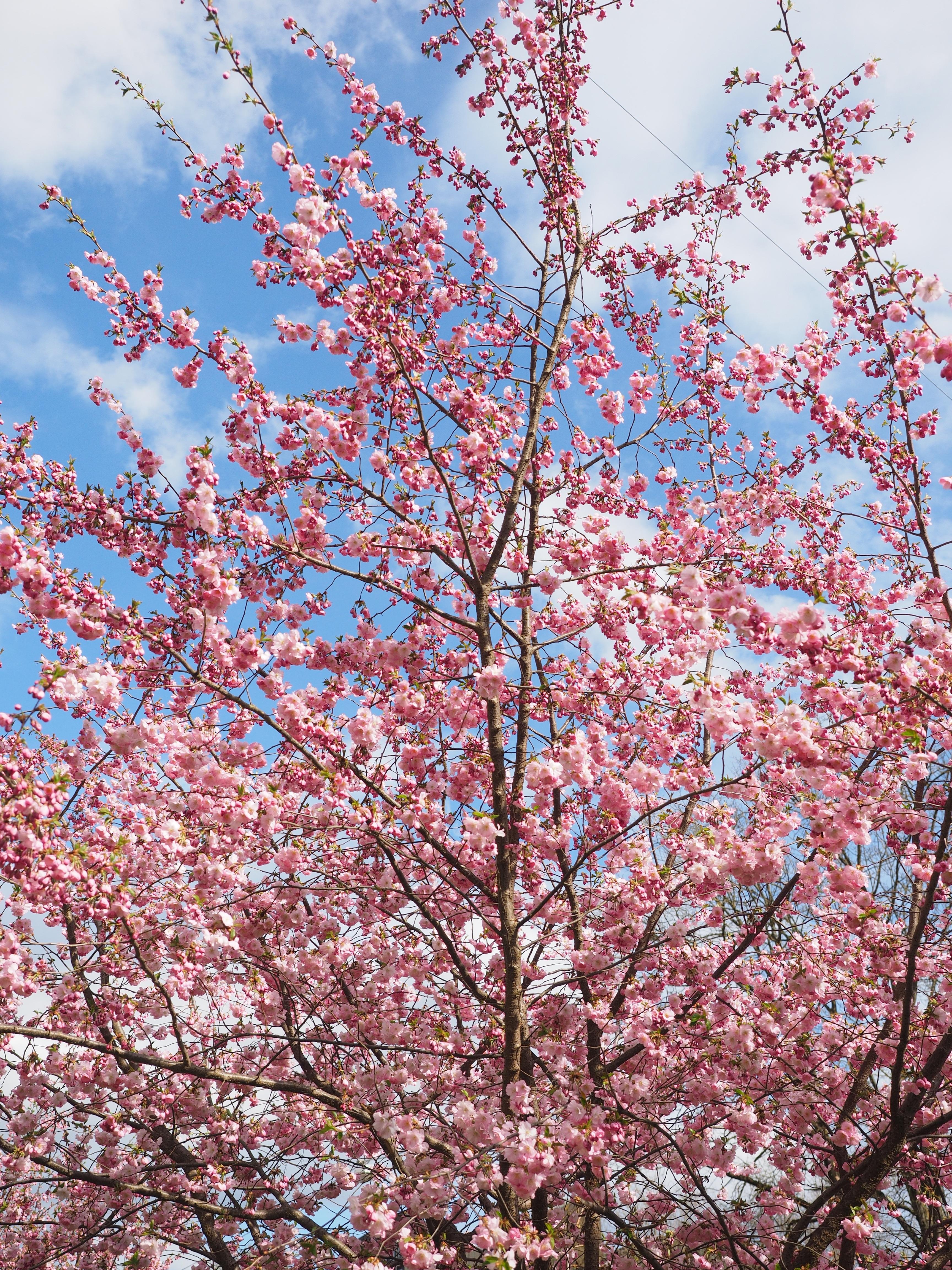 Banco de imagens rvore ramo plantar primavera for Ornamental definicion