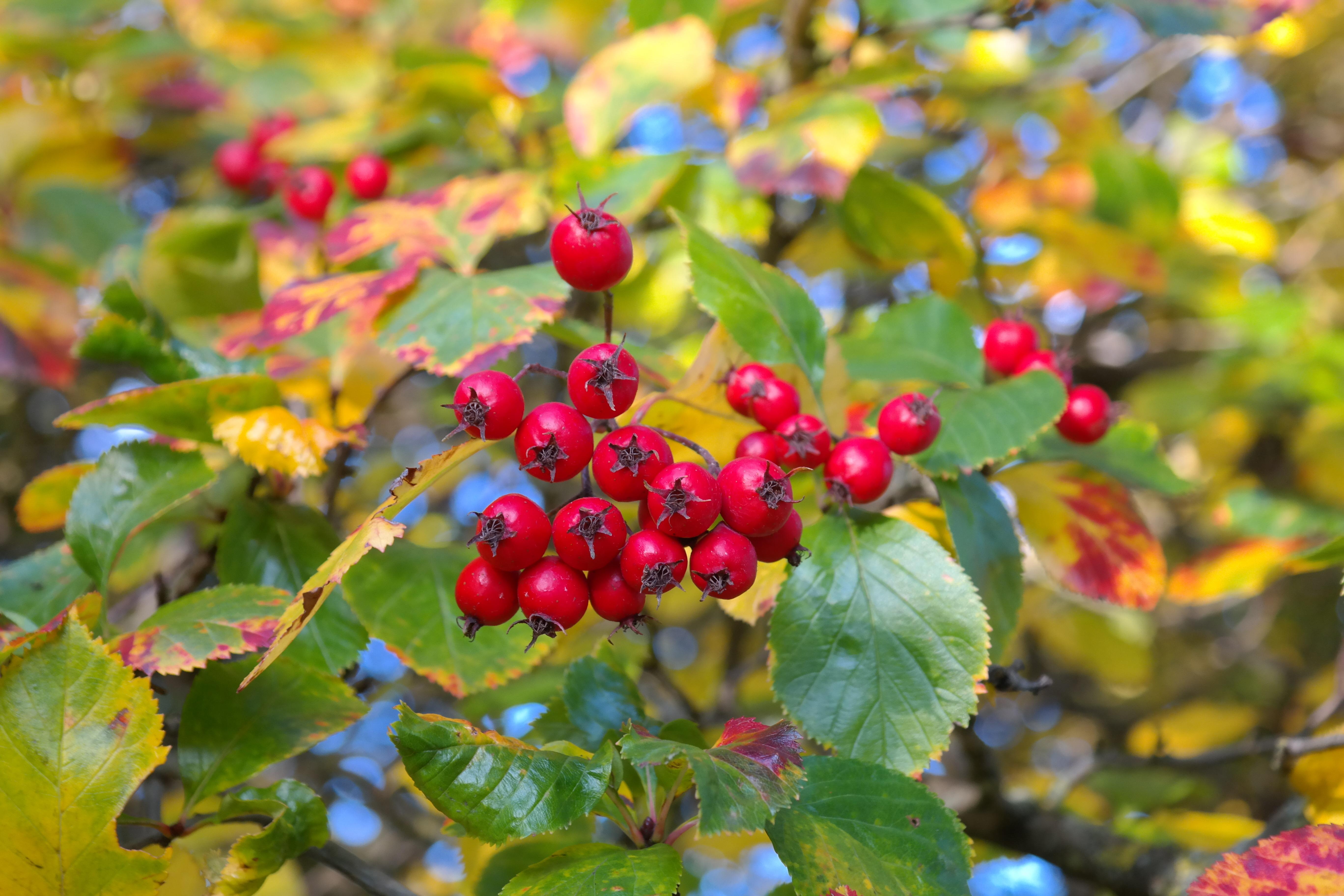 Kostenlose foto Baum Ast blühen Frucht Blatt Blume Busch