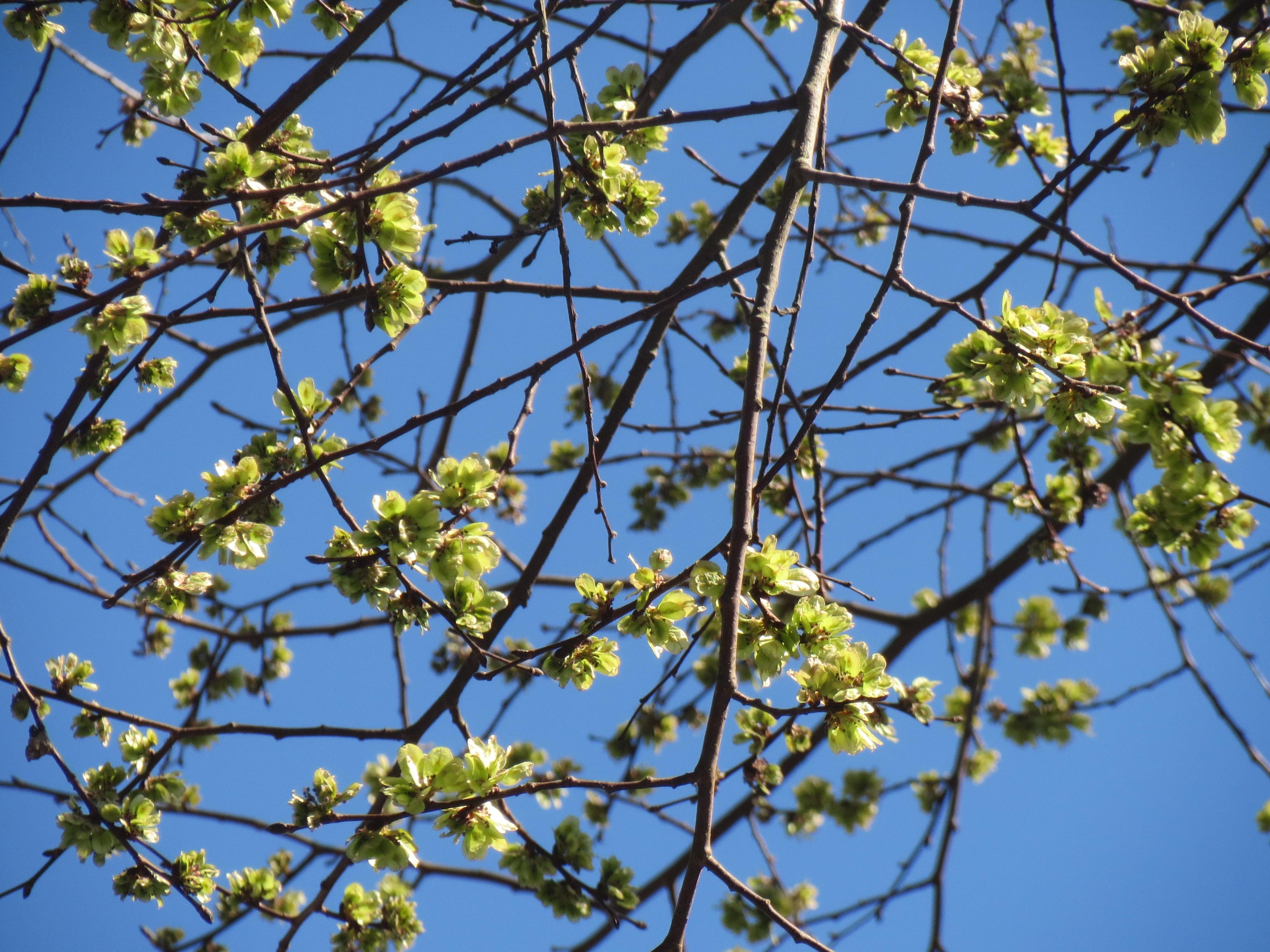 images gratuites arbre branche fleur fruit aliments produire feuilles persistantes. Black Bedroom Furniture Sets. Home Design Ideas