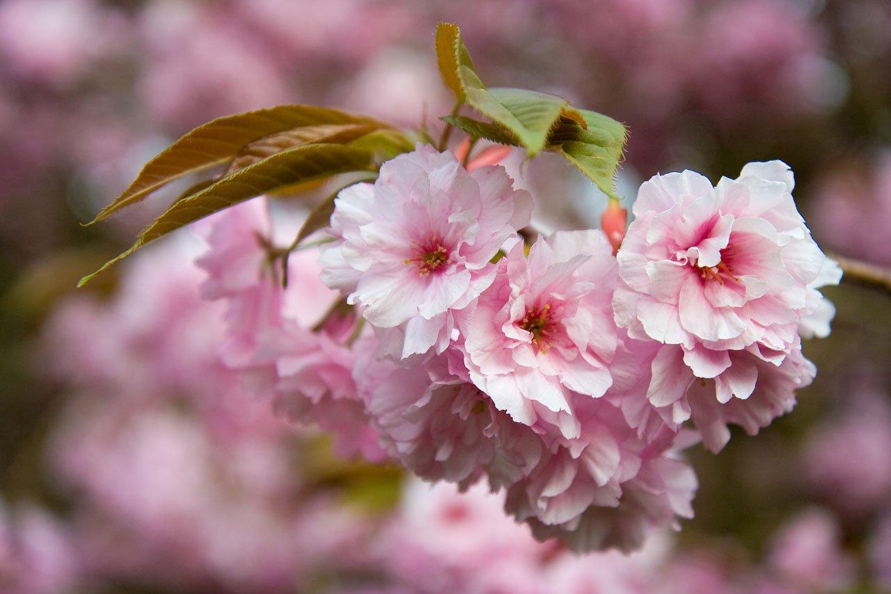 kostenlose foto baum ast bl252hen frucht blume