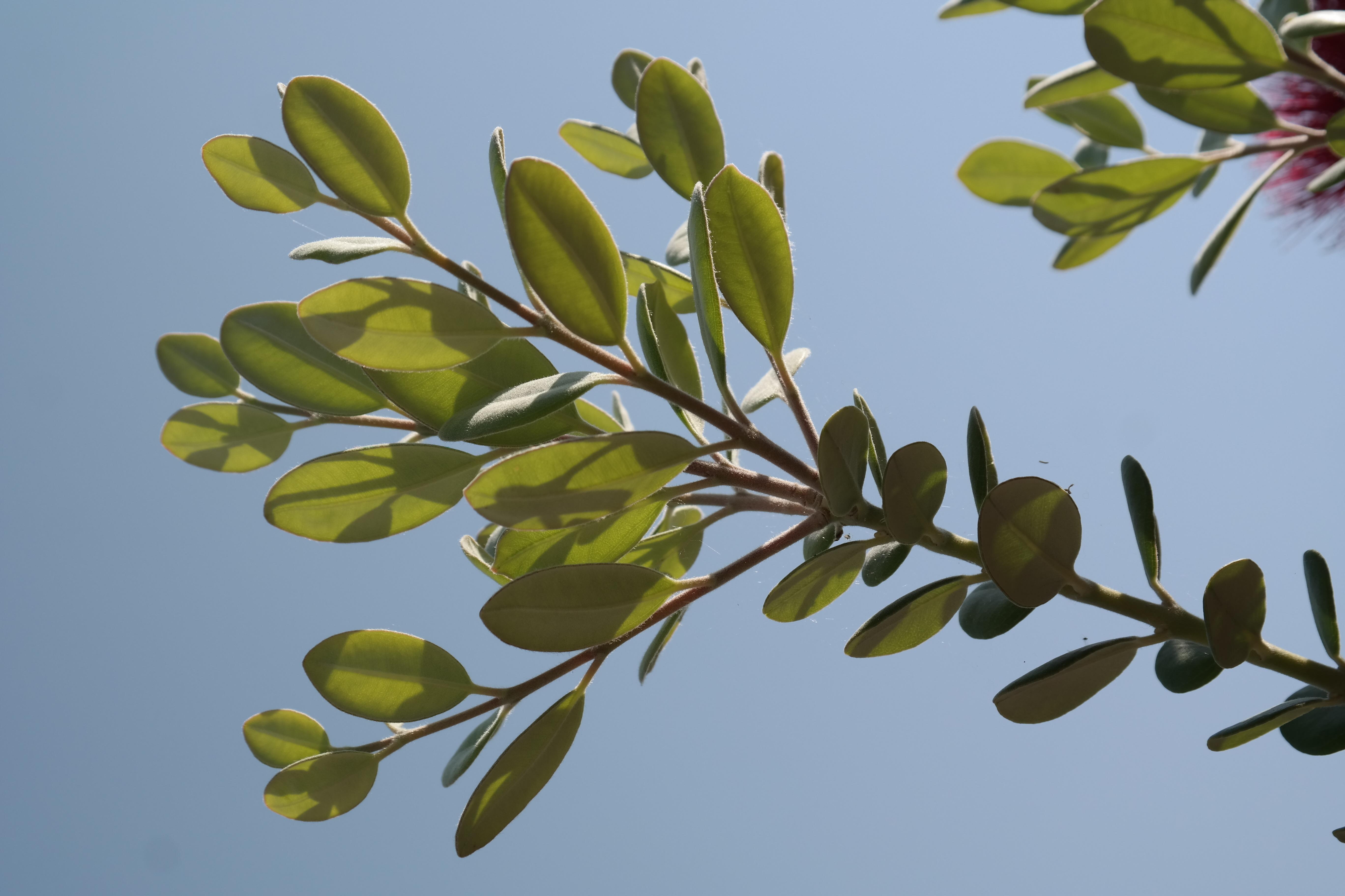 Free Images Branch Blossom Fruit Leaf Flower Food Produce