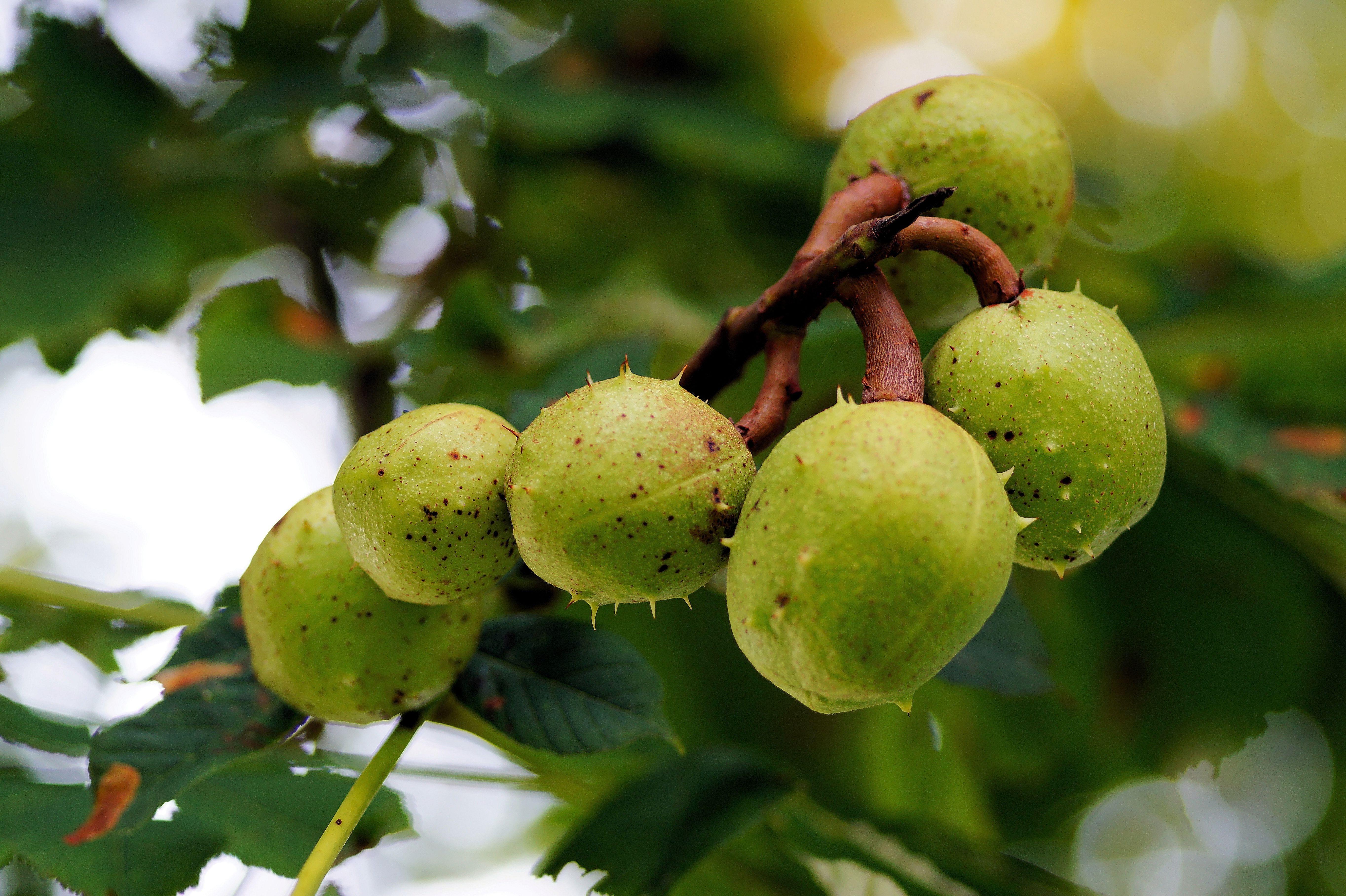 Fotos gratis rbol rama flor fruta hoja verano for Arboles para plantar en verano
